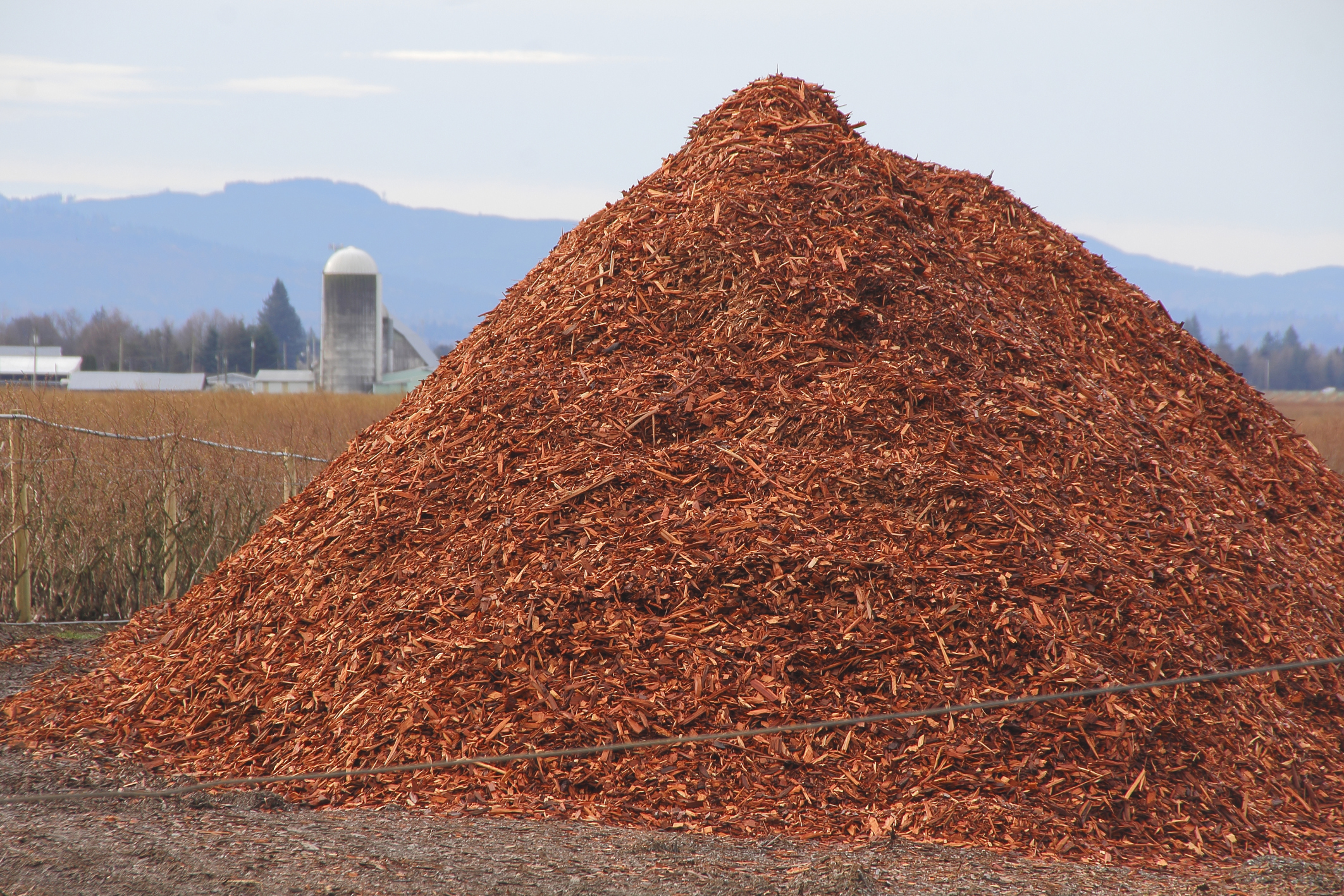 The Wood Chips Are Down: GE Is Building A Massive Biomass Energy ...