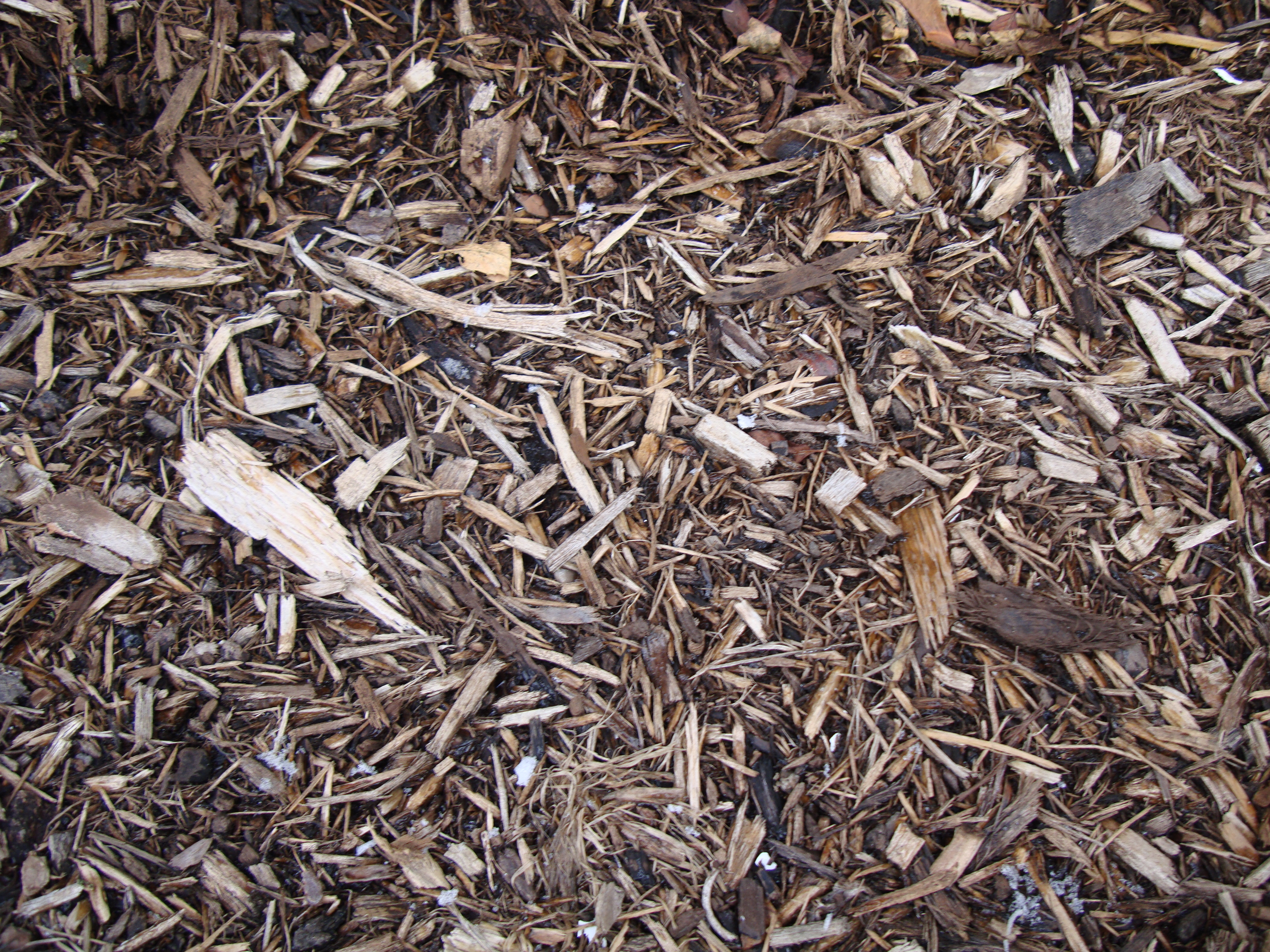 Woodchips, Backgrounds, Dirt, Ground, Textures, HQ Photo