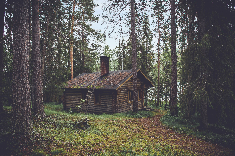 Wooden House, Jungle, Tree, Wood, Hut, HQ Photo