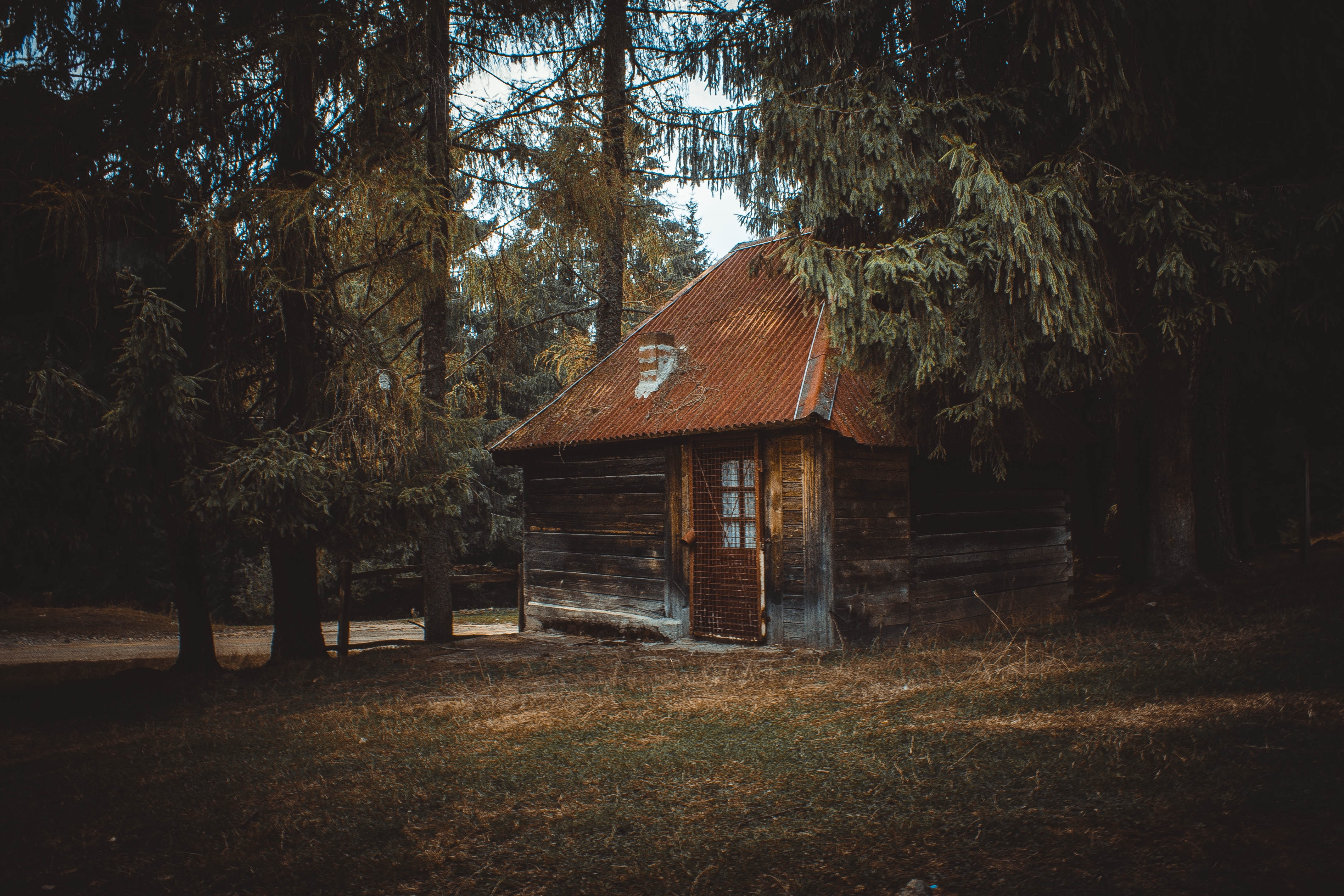 Wooden house on a forest photo