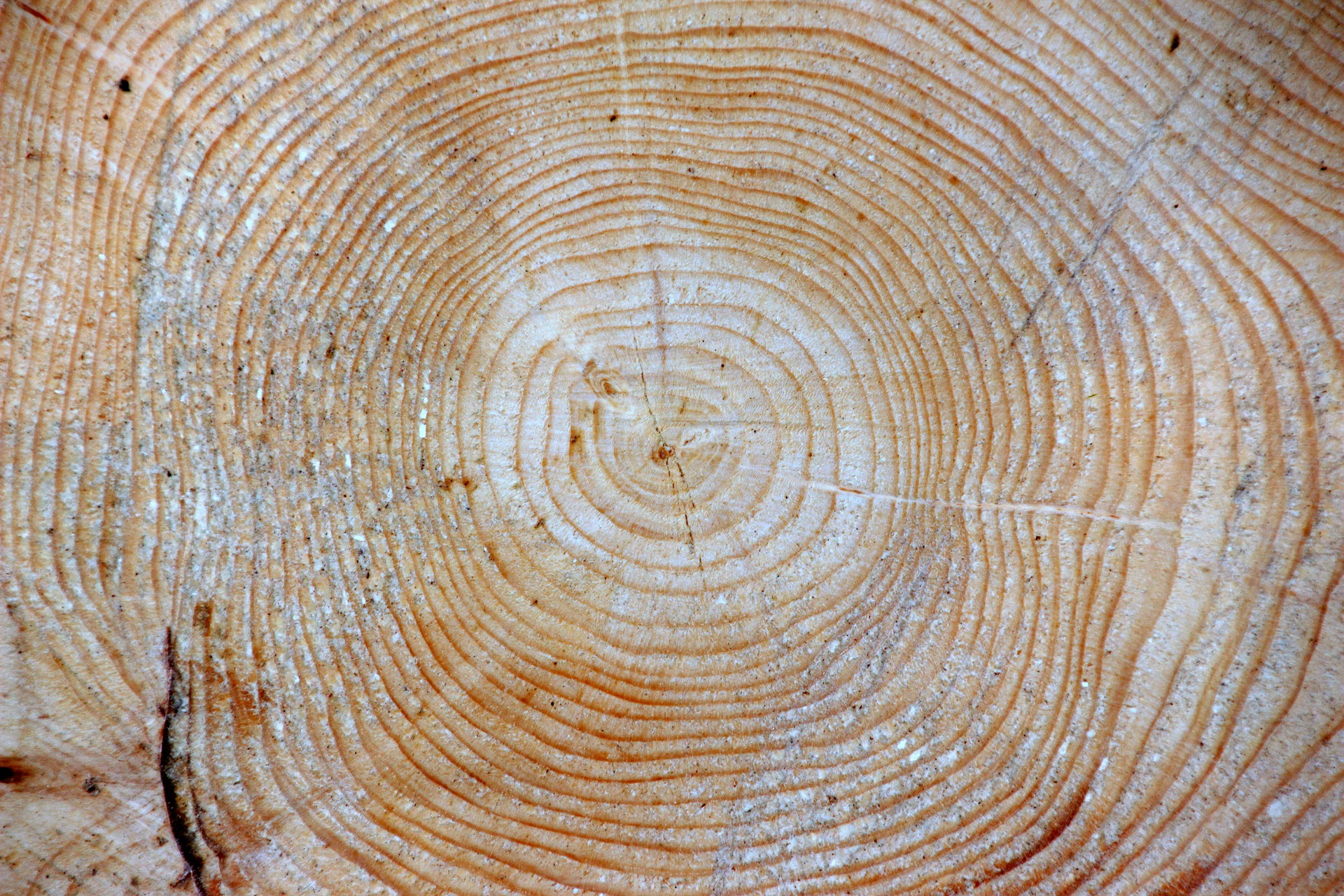 Wooden Log Texture, Circles, Cut, Log, Section, HQ Photo