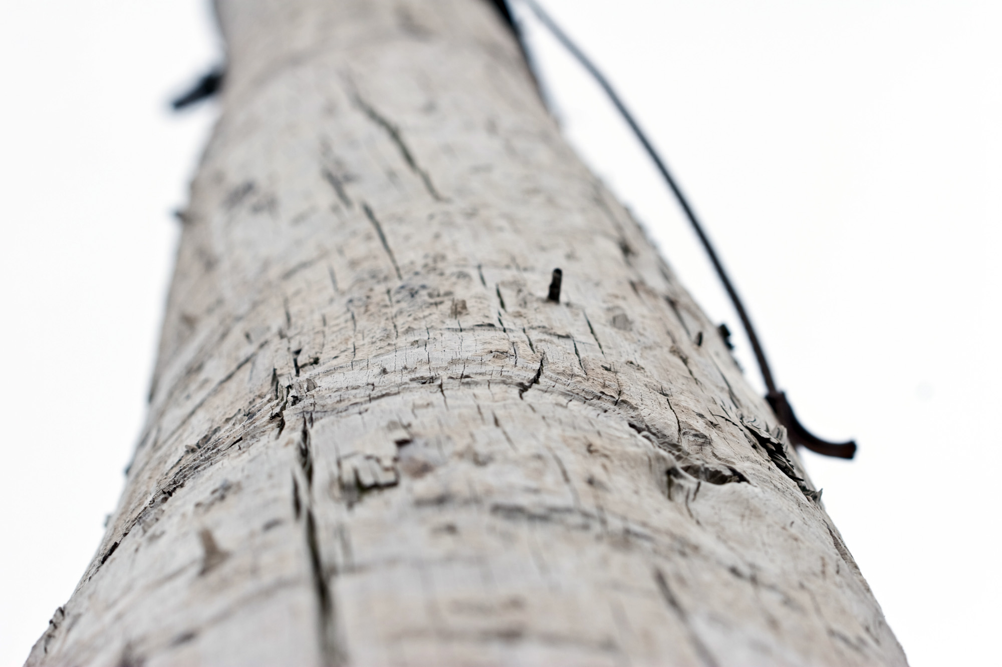 Wooden pole, Pole, White, Up, Tree, HQ Photo