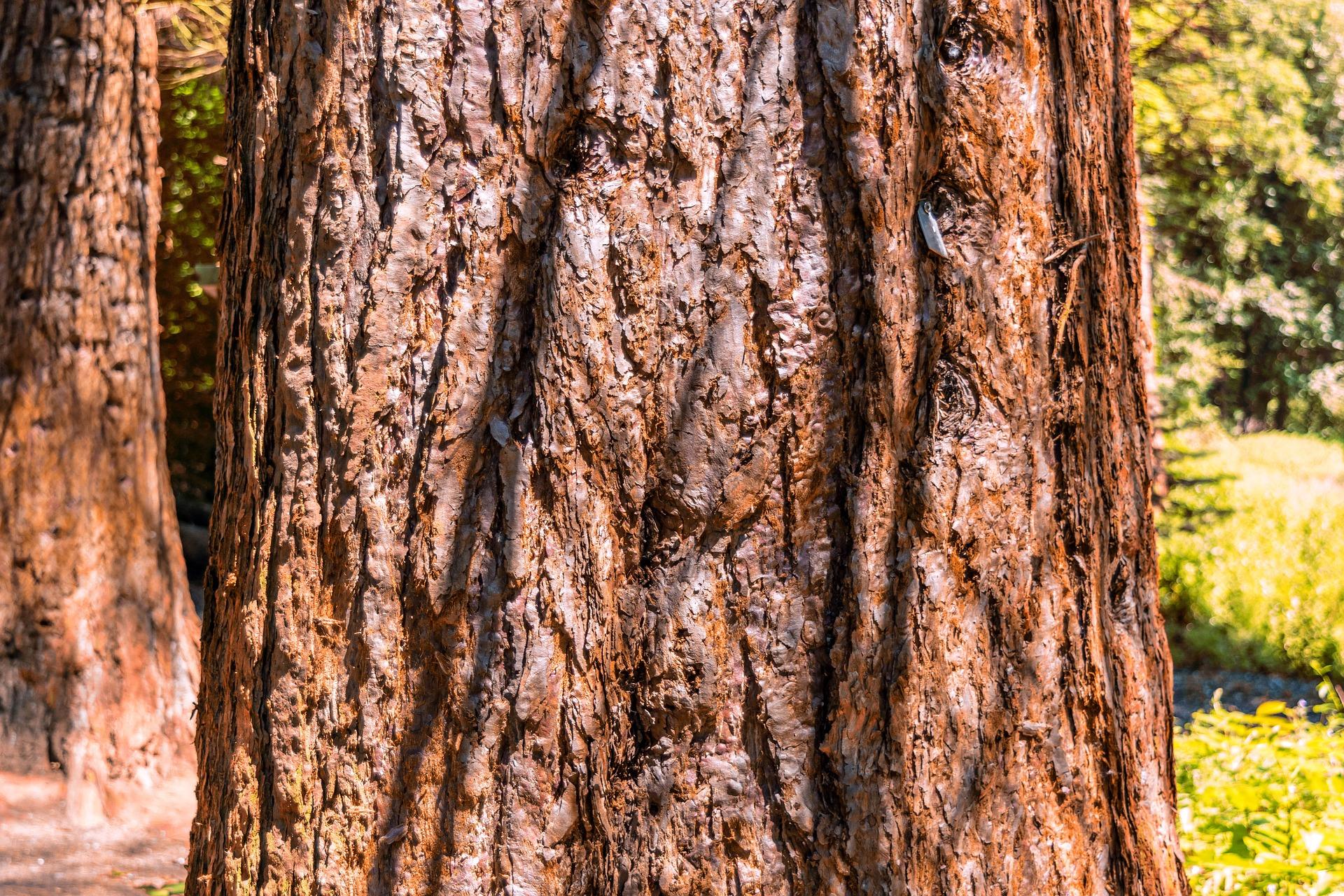 Wooden Texture, Cut, Log, Texture, Tree, HQ Photo