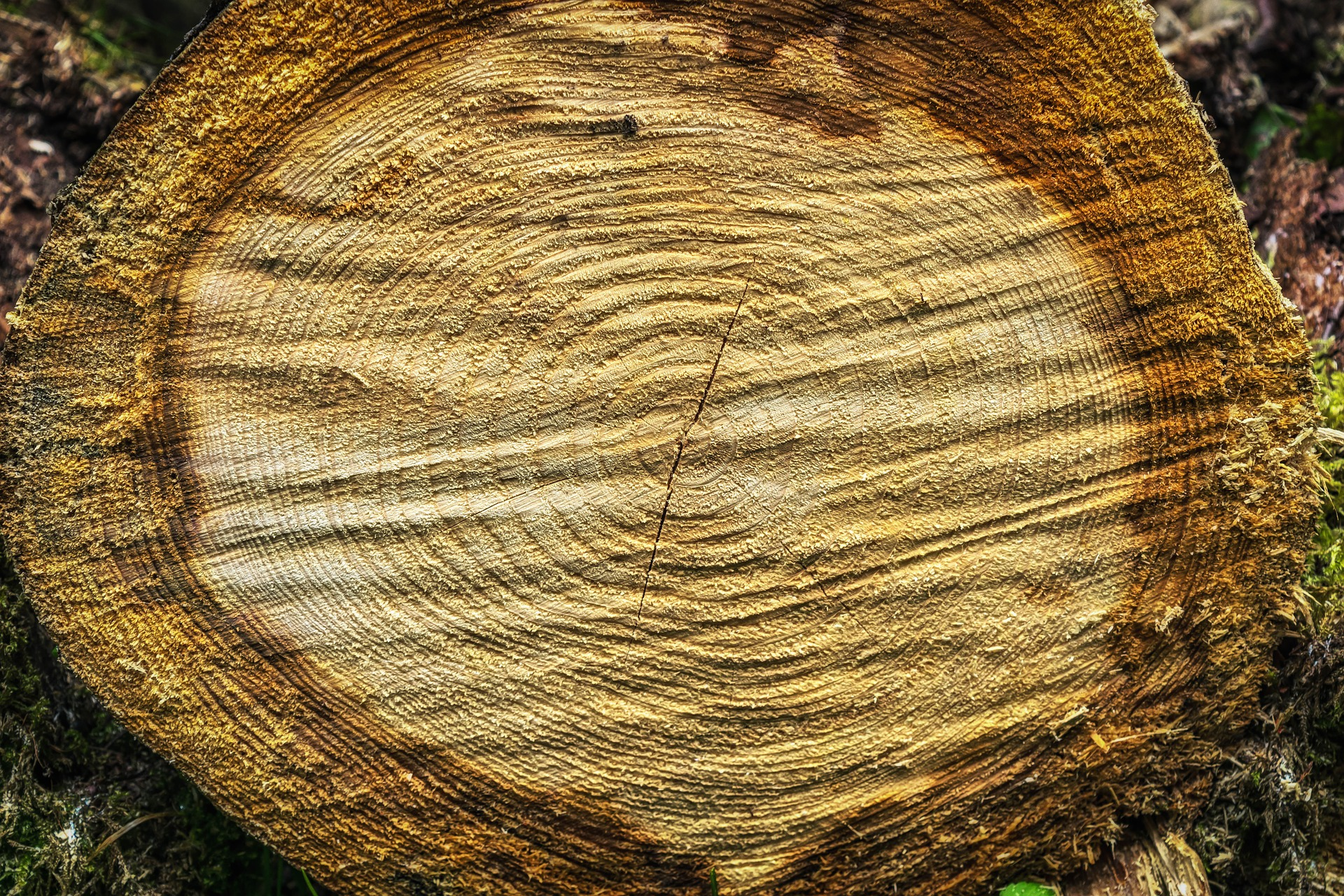 Wooden Texture, Cut, Log, Texture, Tree, HQ Photo