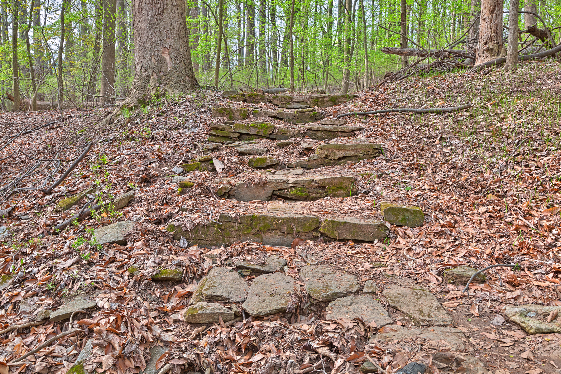 Woodend sanctuary steps - hdr photo