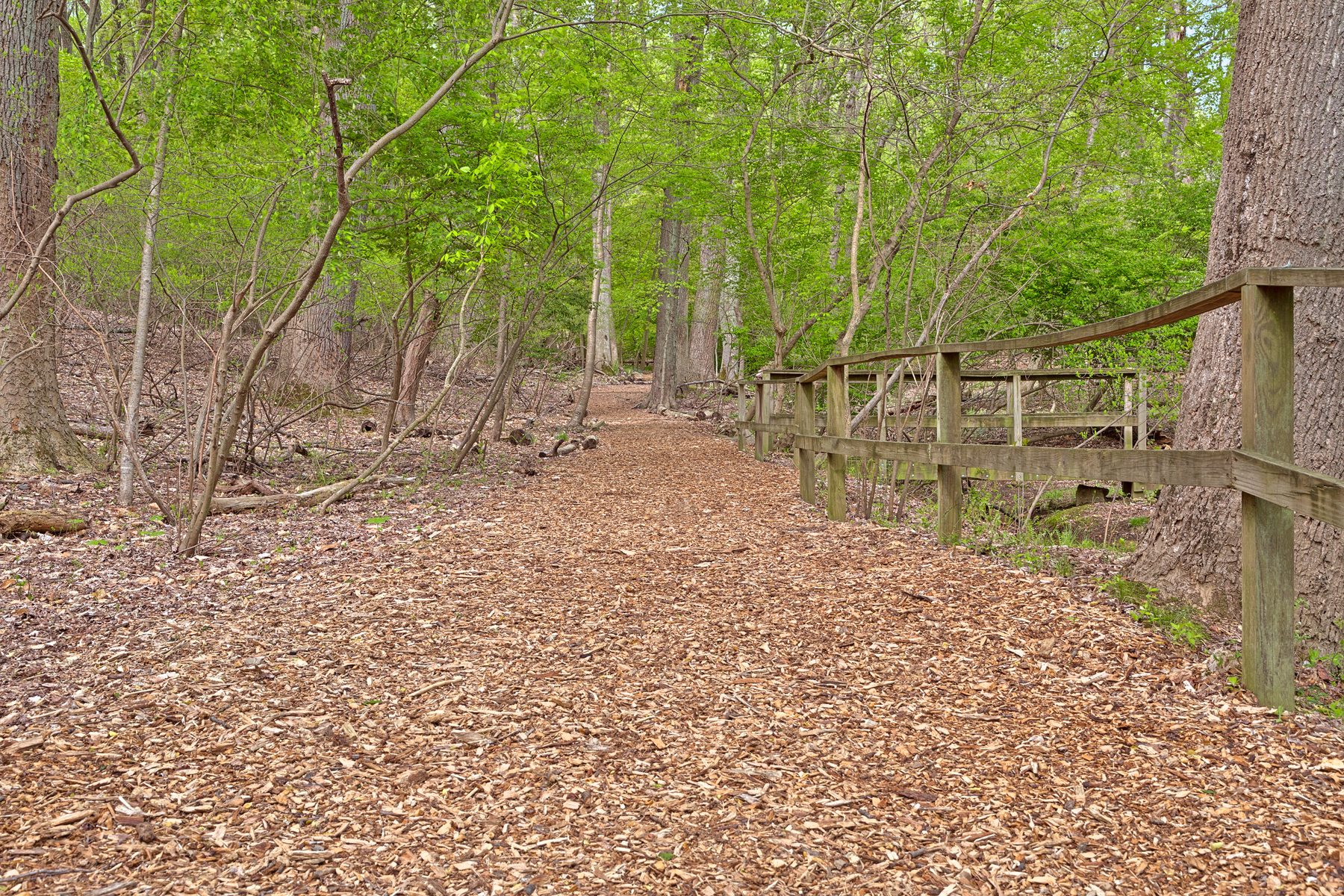 Woodend sanctuary trail - hdr photo