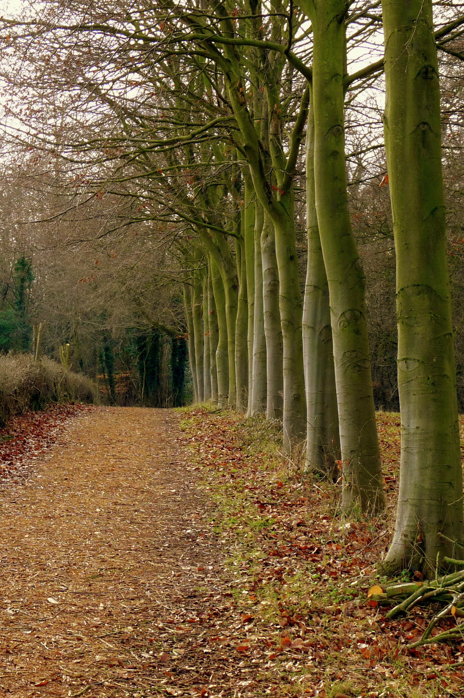 Woodland pathway photo