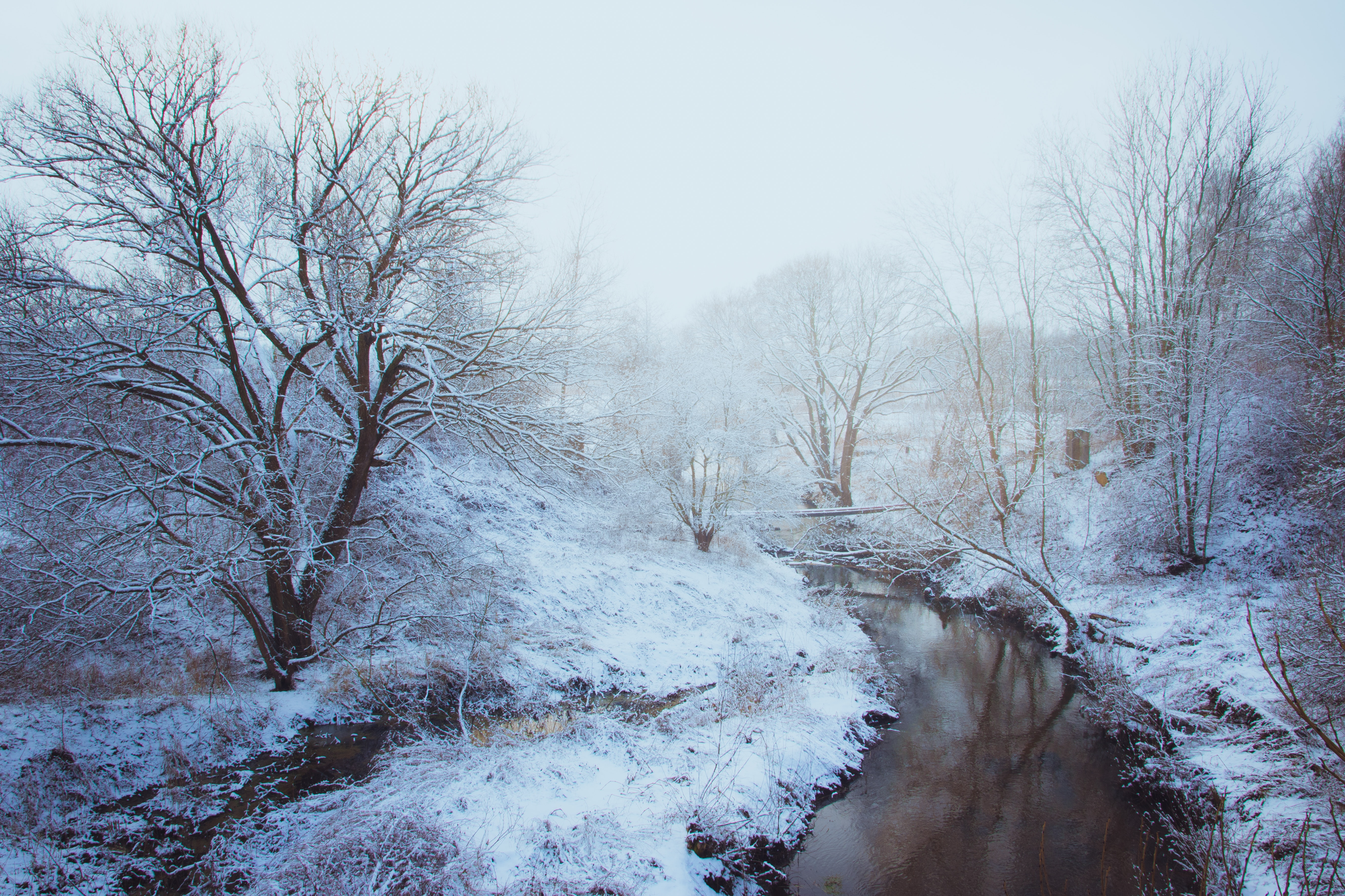 Woodland stream covered with snow photo