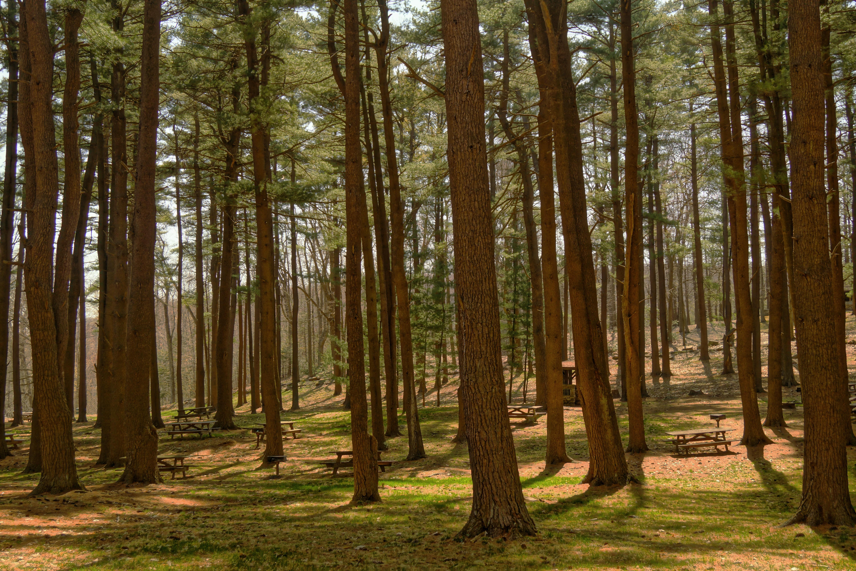 Woods, Tree, Wood, Nature, Bunch, HQ Photo