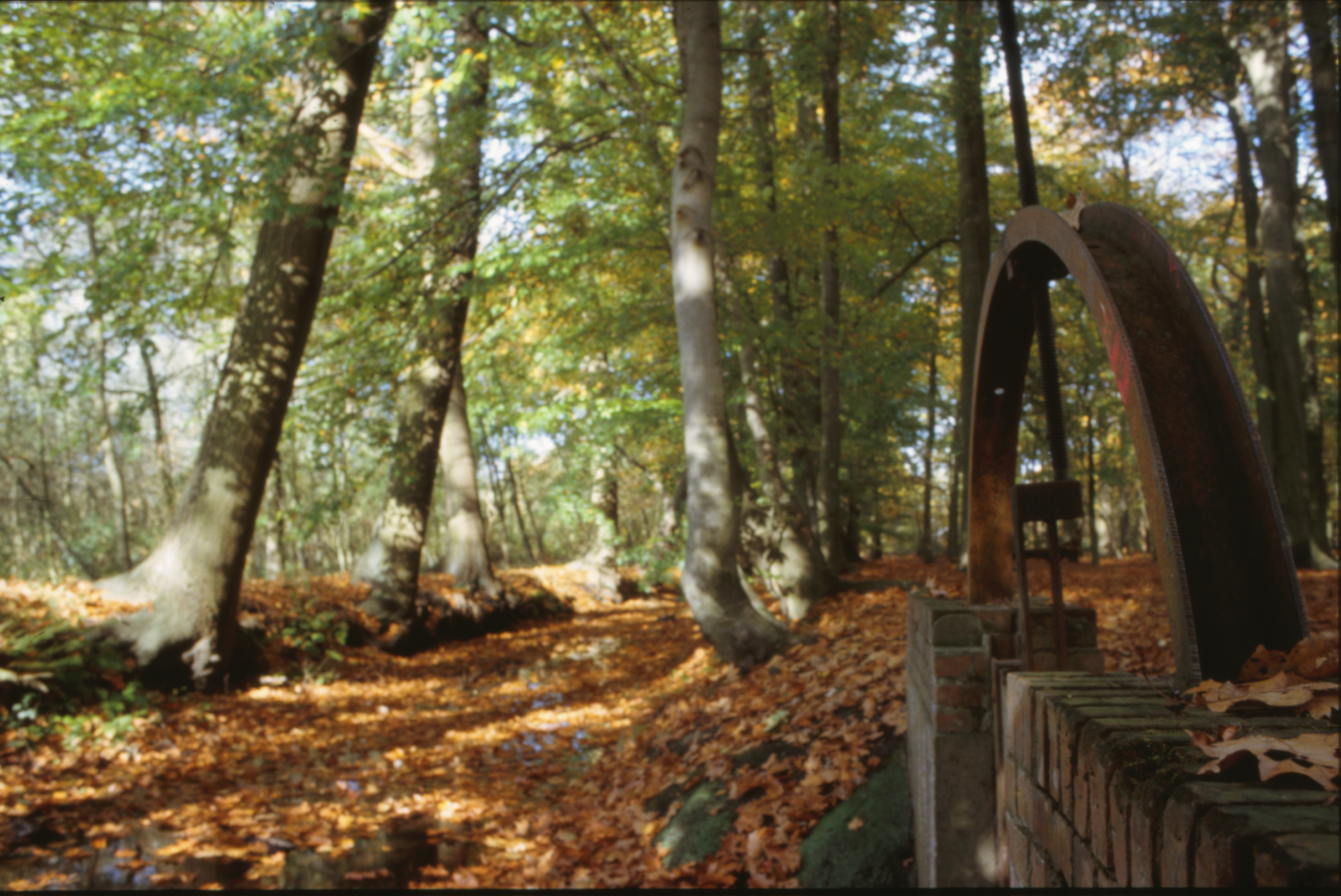 Woods photo