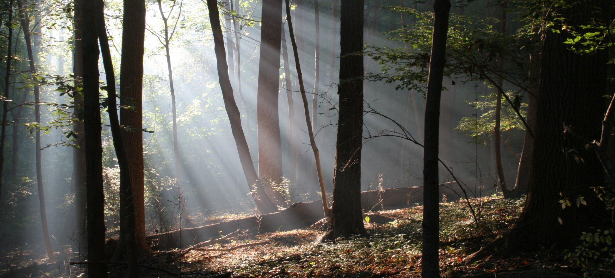 Saunders Woods Preserve - Natural Lands