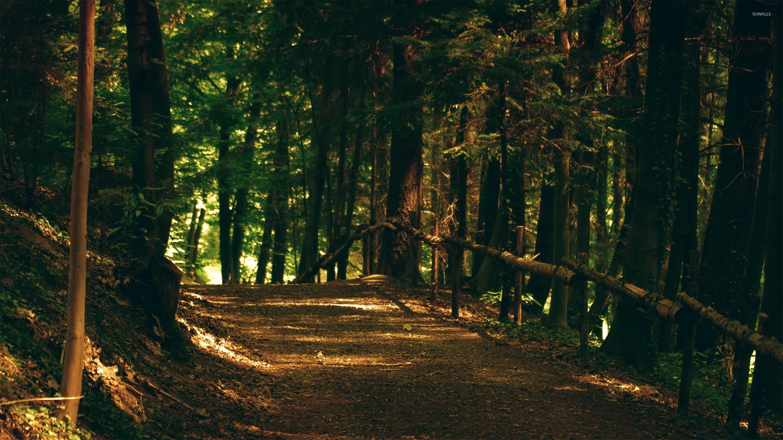 Gorgeous woods wallpaper - Nature wallpapers - #35821