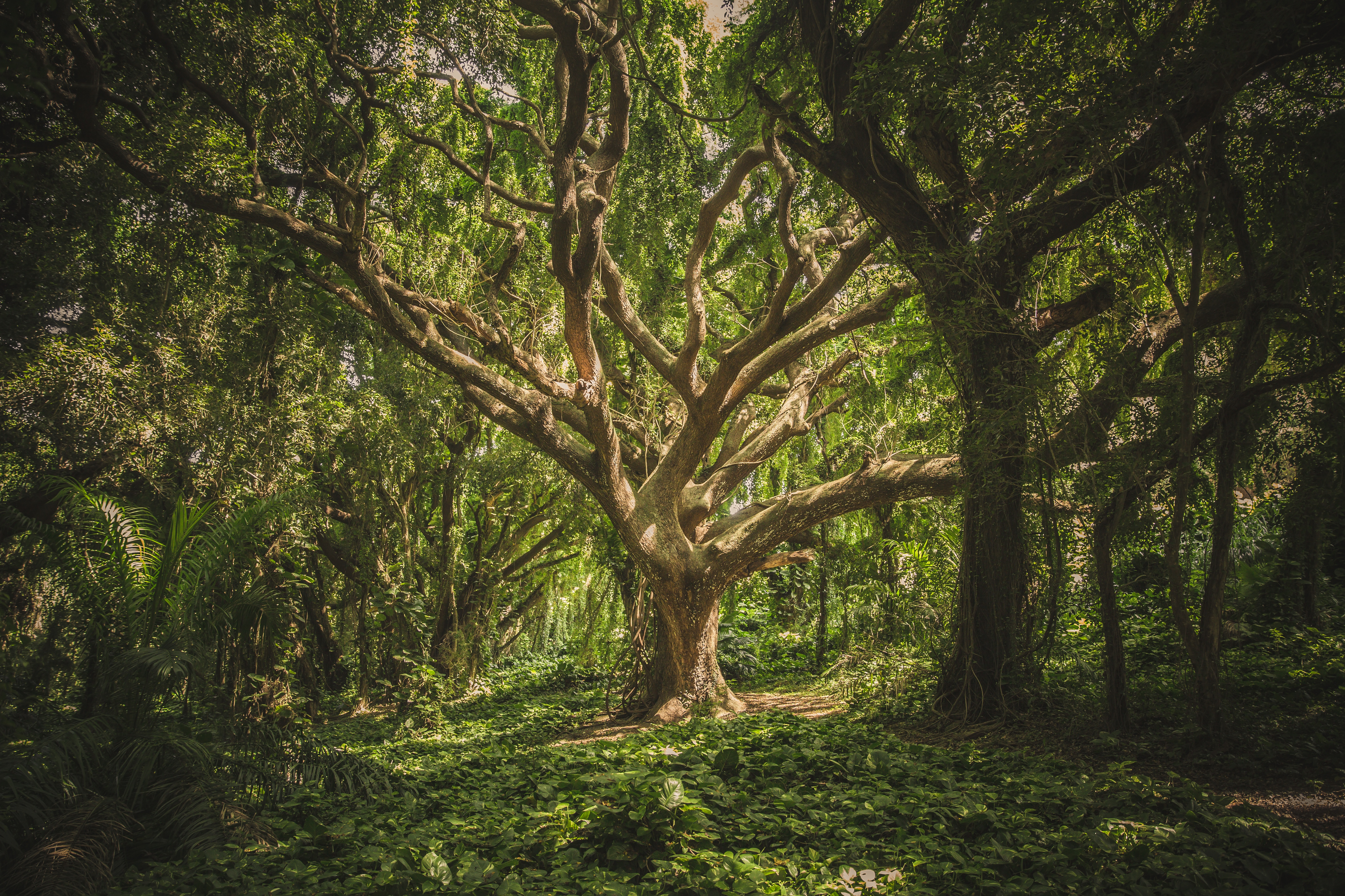 Woods, Tree, Wood, Nature, Forest, HQ Photo