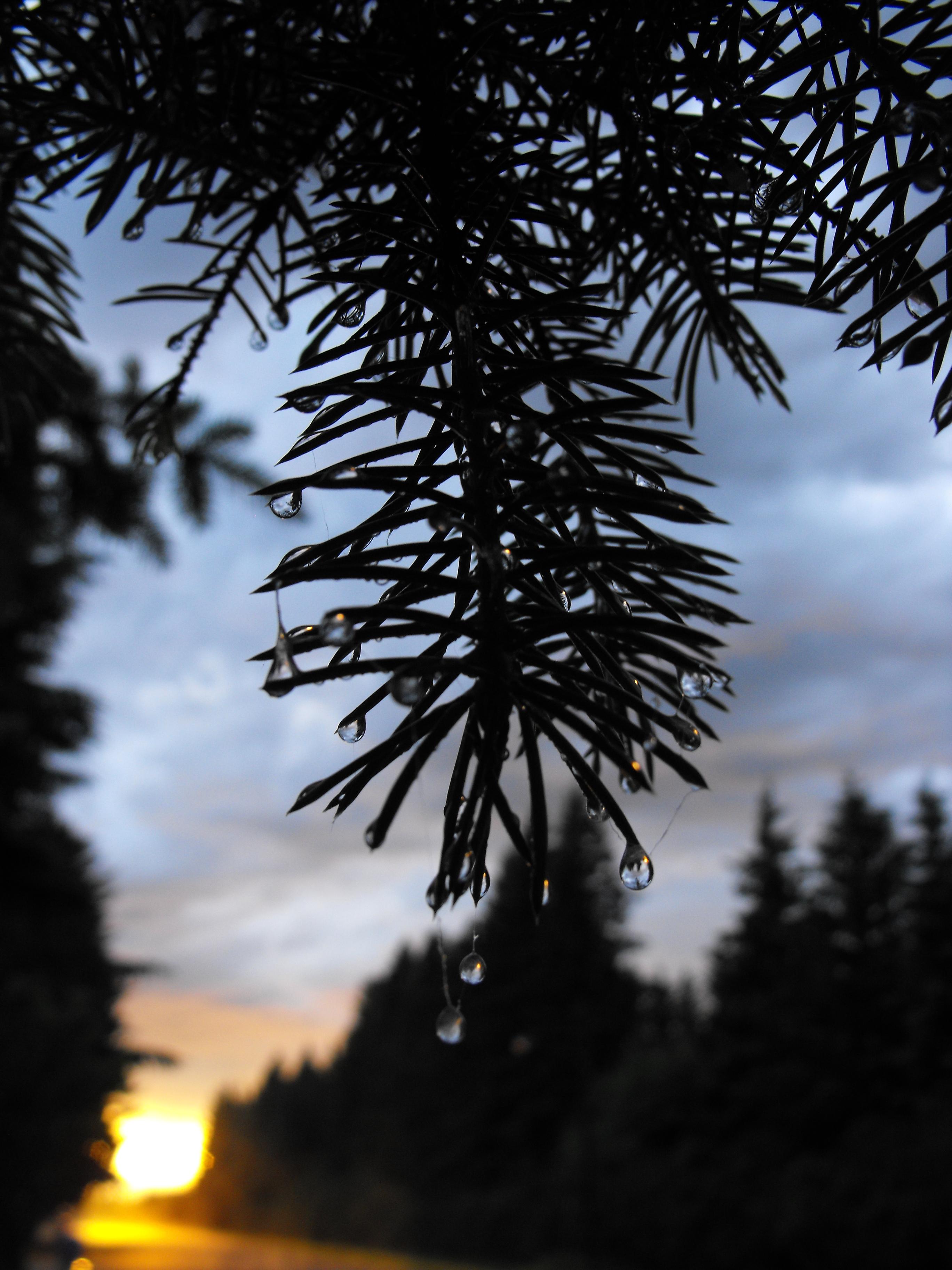 Woods at dusk photo