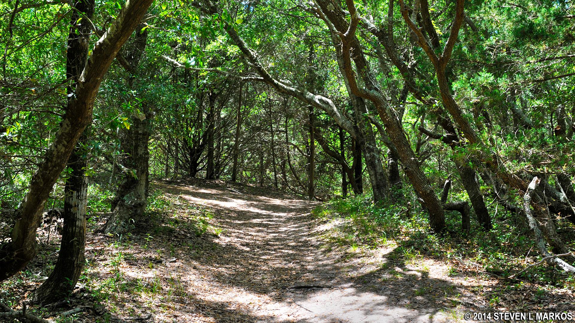 Cape Hatteras National Seashore | BUXTON WOODS TRAIL |