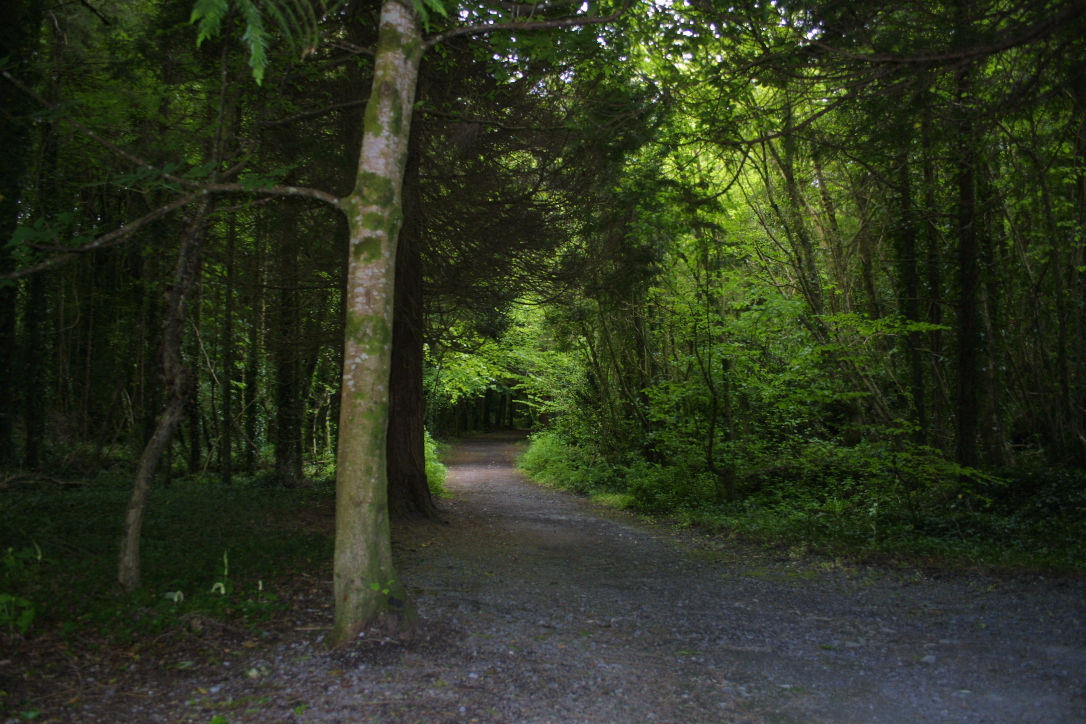 woods trail | Understanding Weakness