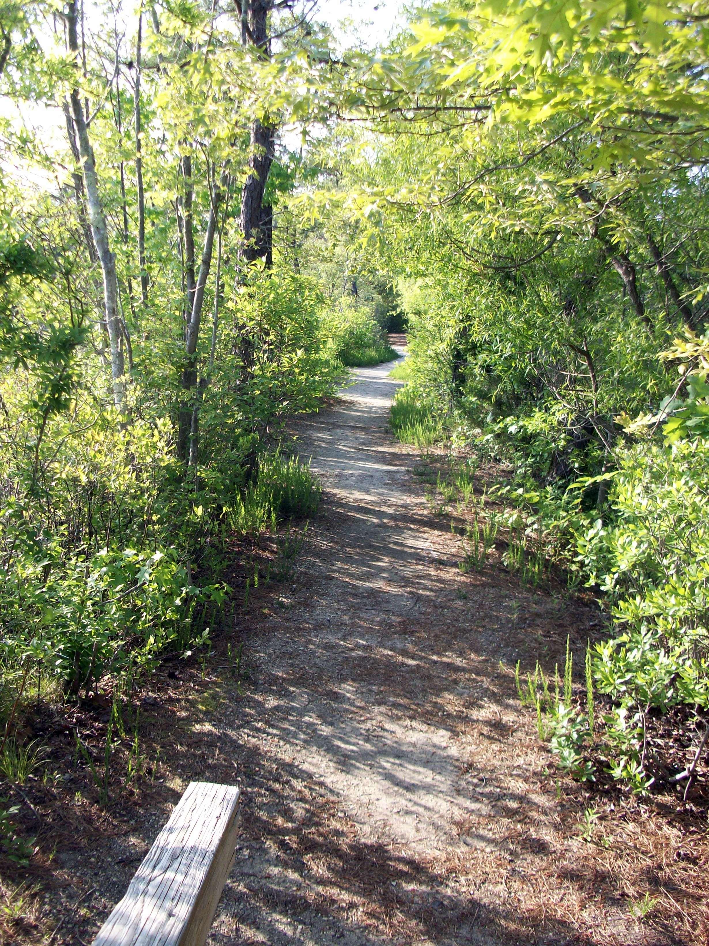 Woods Trail, Walking, Woods, Trails, Trail, HQ Photo