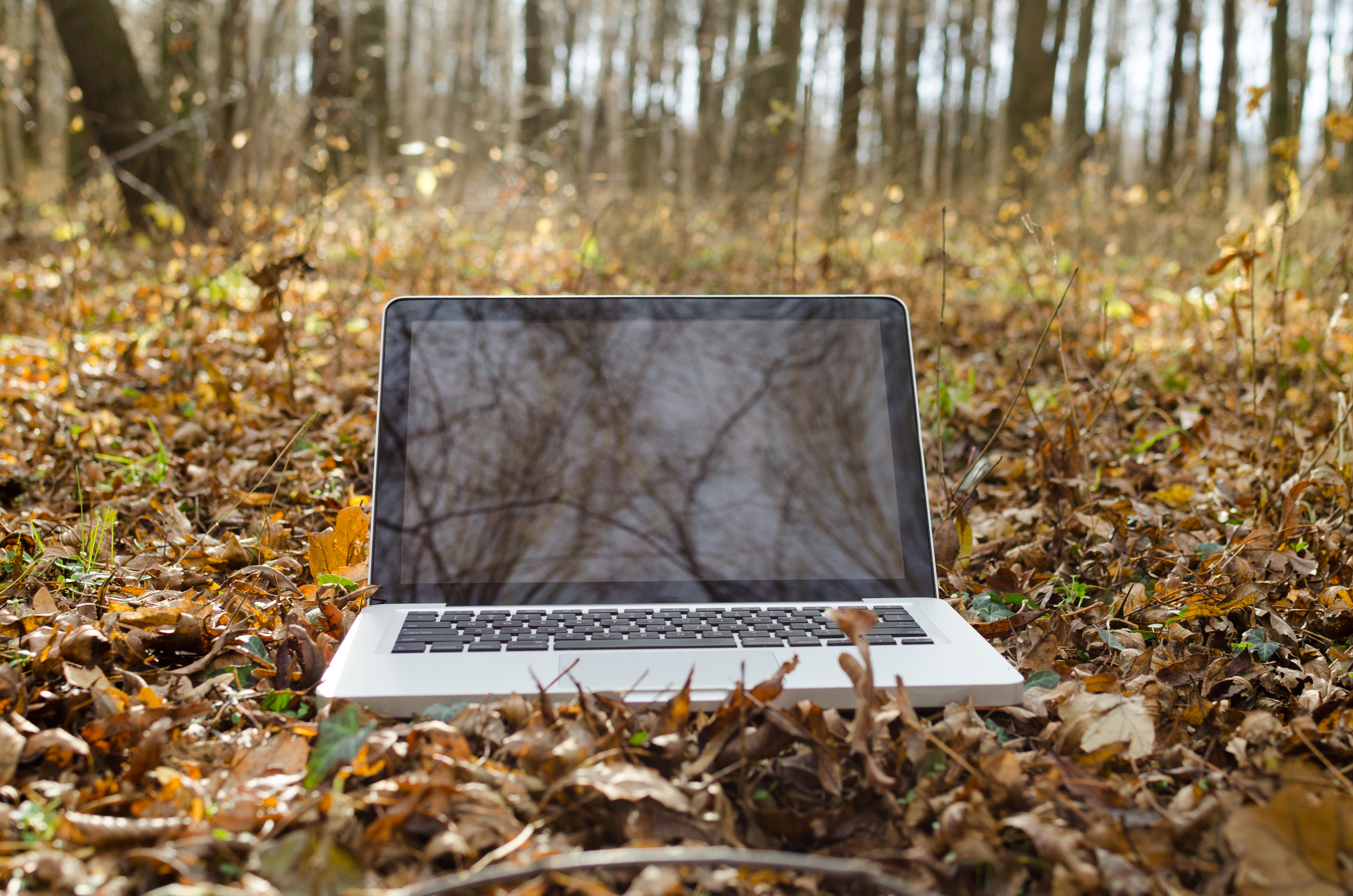 Working on notebook in forest photo