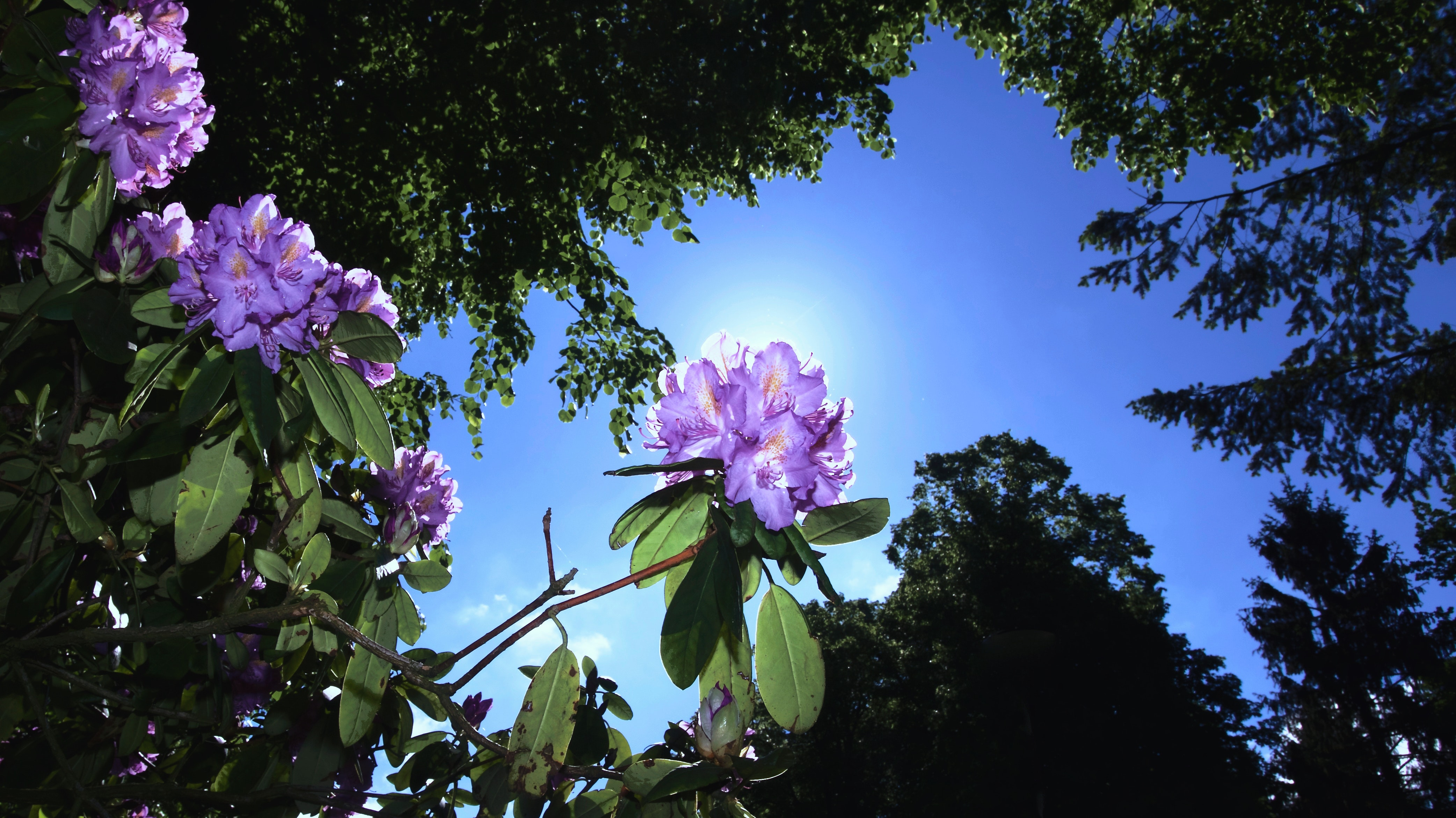 Free Photo Worms Eye View Of Flowers Beside Trees Under The Sky