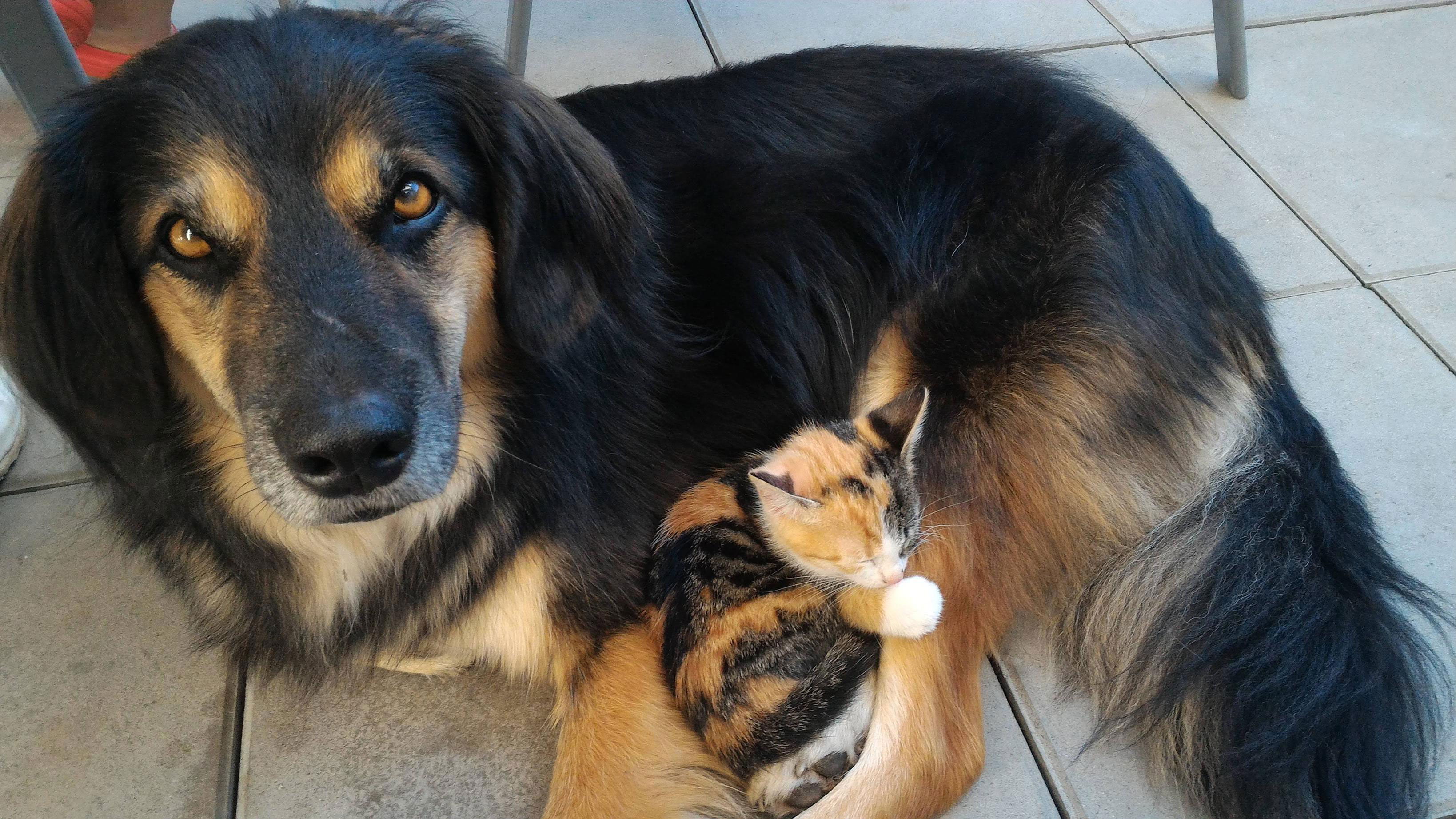 We were worried the dog and kitten wouldn't get along