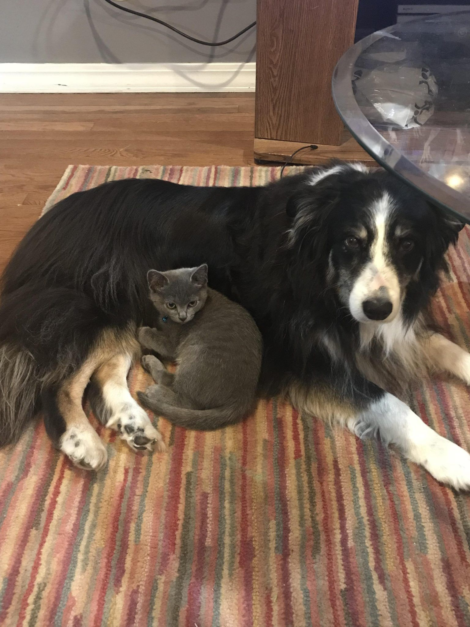 We were worried our new kitten wouldn't get along with our older dog ...