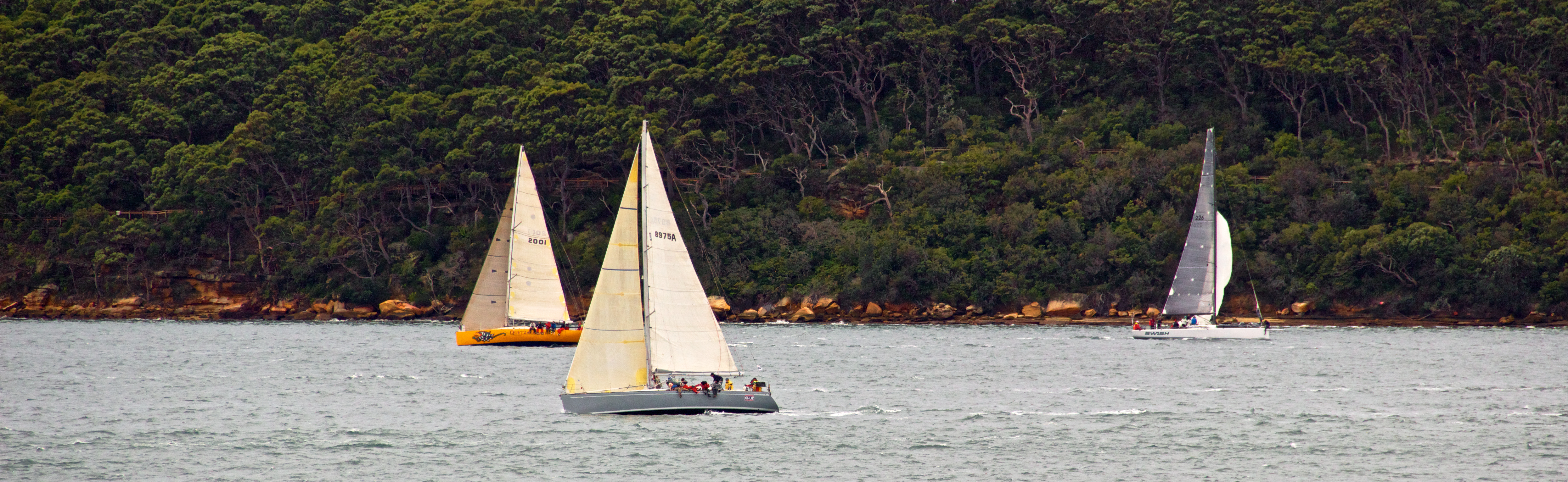 Yachts from garden island photo