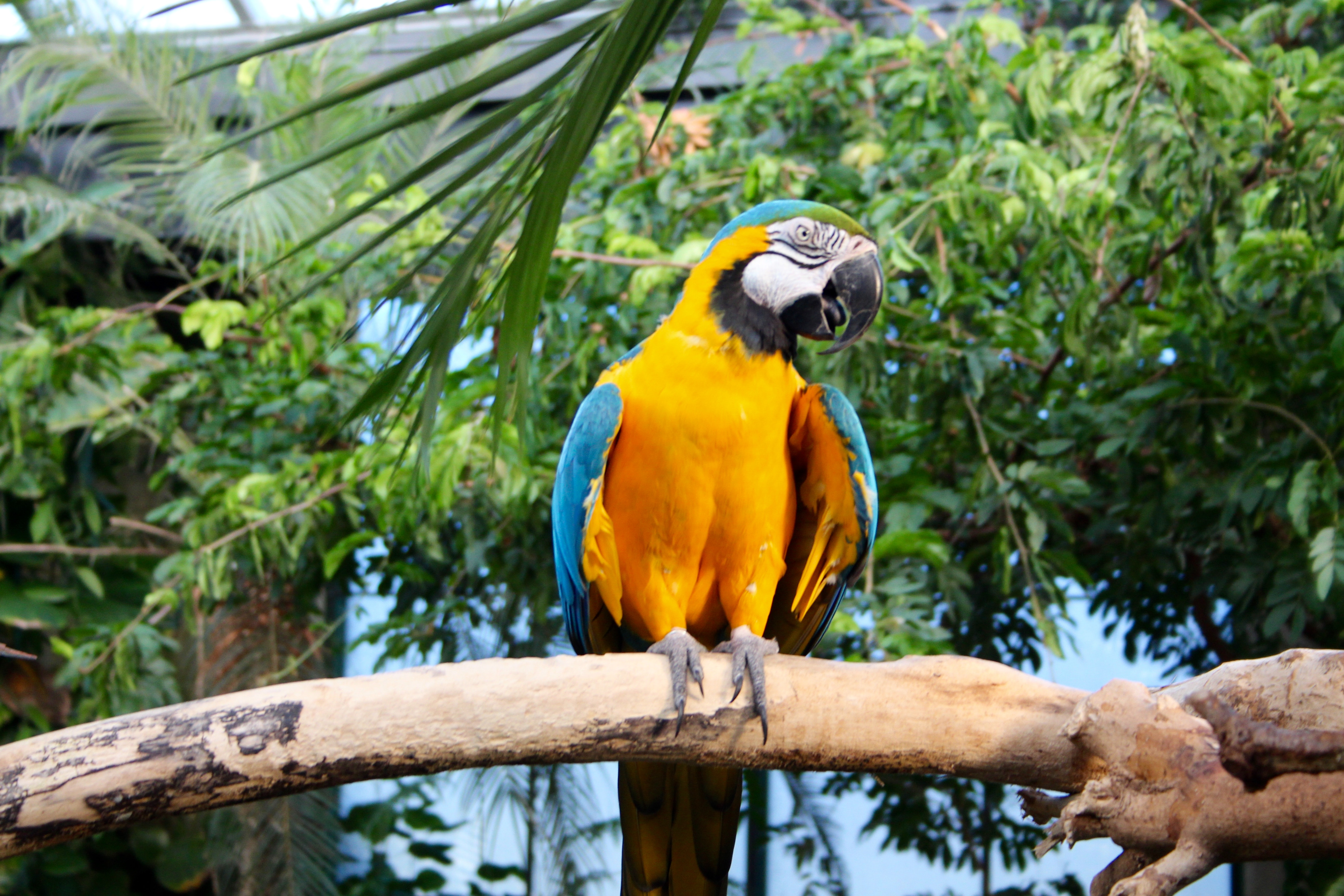 Yellow and blue parrot perched on tree photo