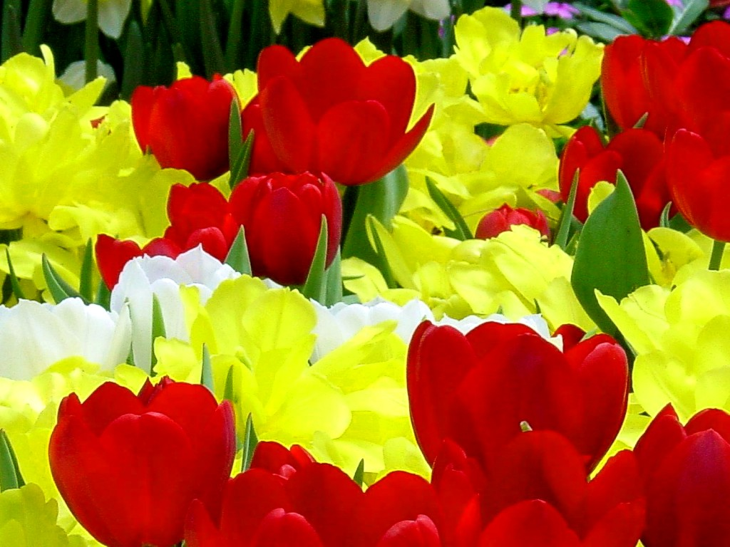 Free photo yellow and red flowers yellow red garden non yellow and red flowers yellow red garden flowers hq photo mightylinksfo