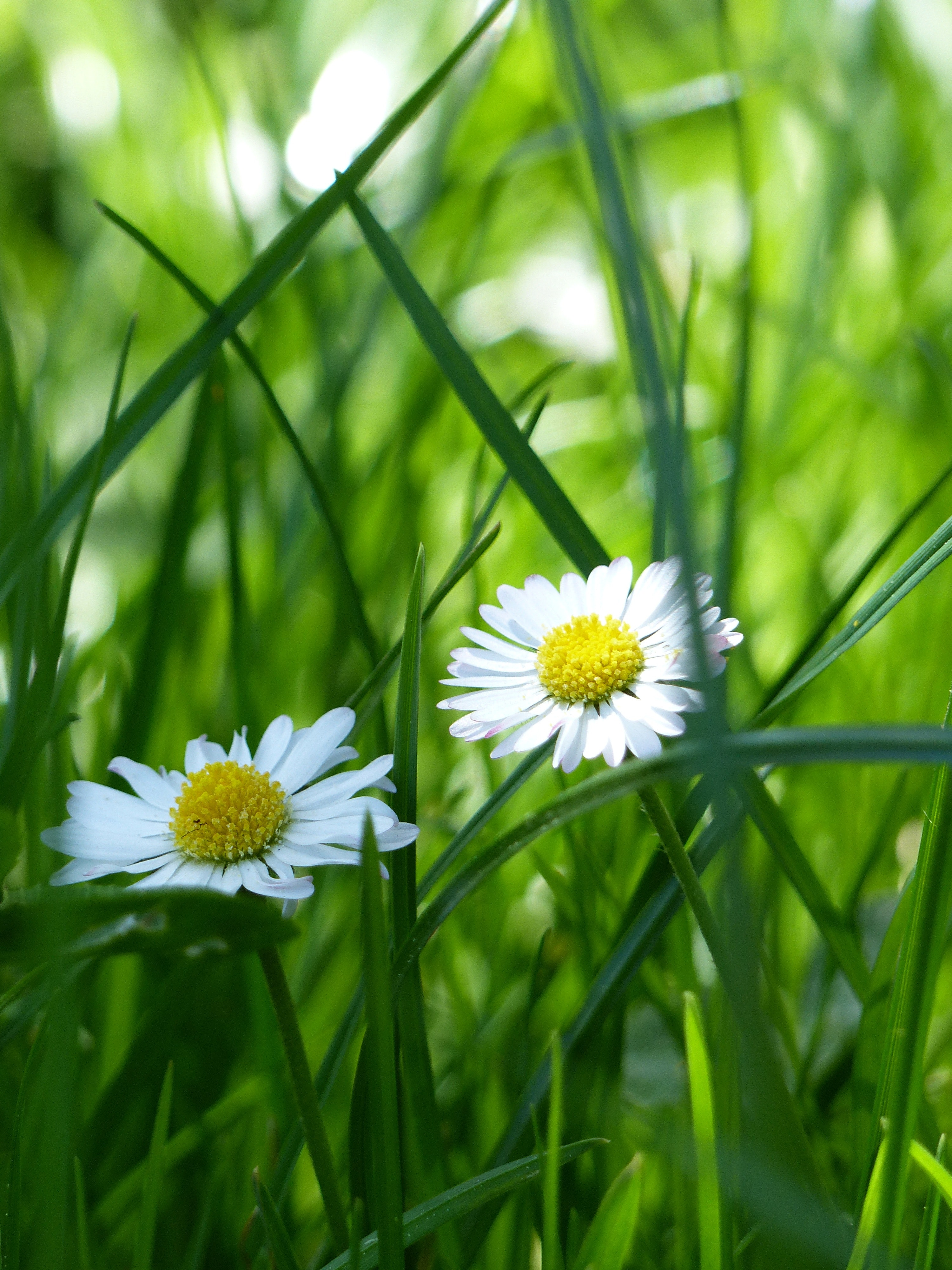 Yellow and white flower surrounded by green grass photo