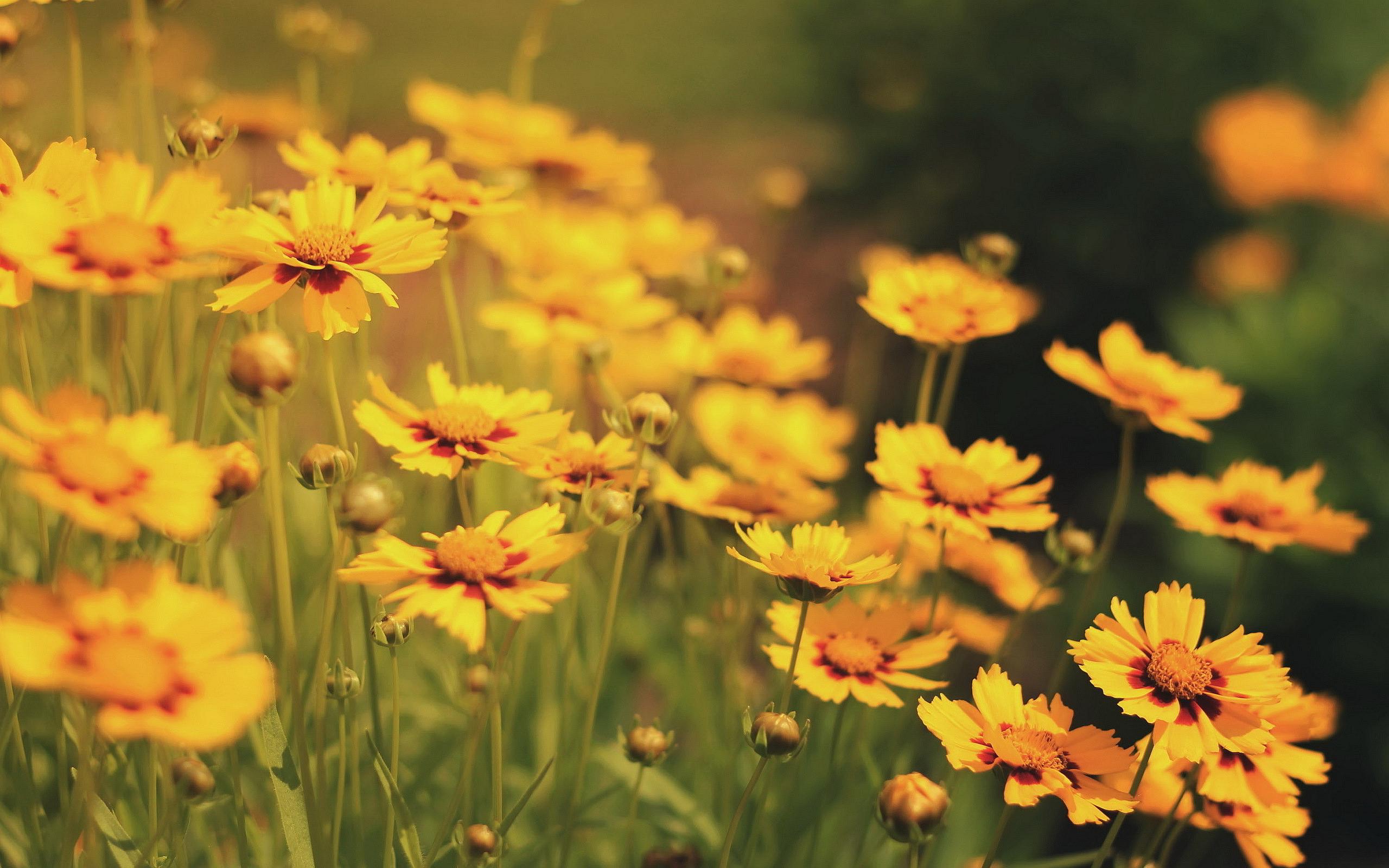 Free Photo Yellow Beautiful Flower May Growing Gardening Free