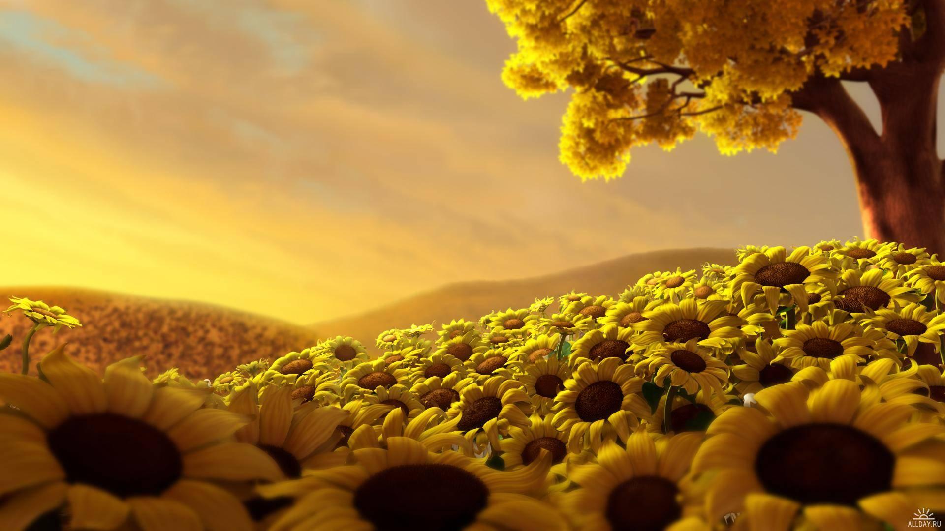 Yellow beauty photo