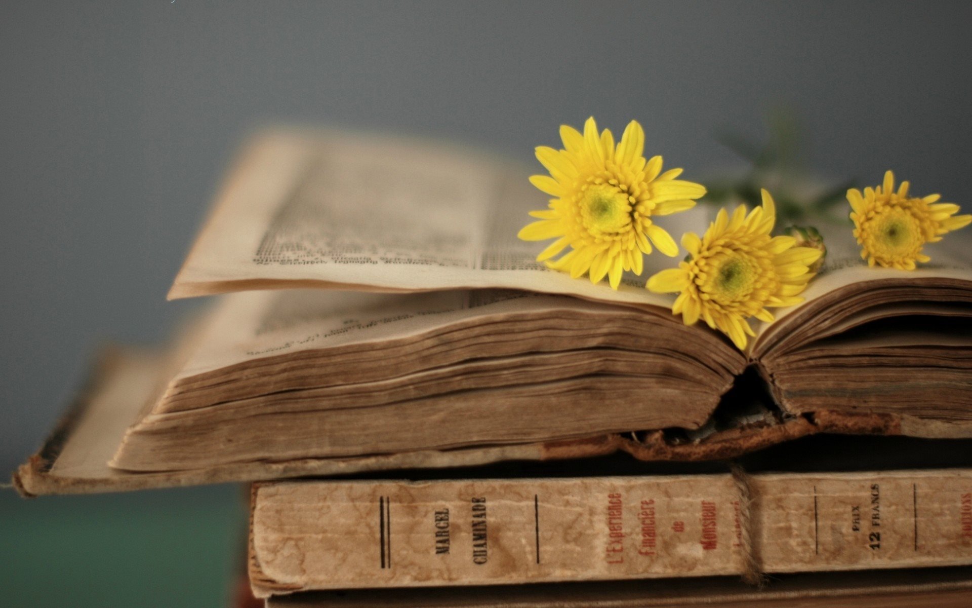 Yellow flowers on the old book / 1920 x 1200 / Other / Photography ...