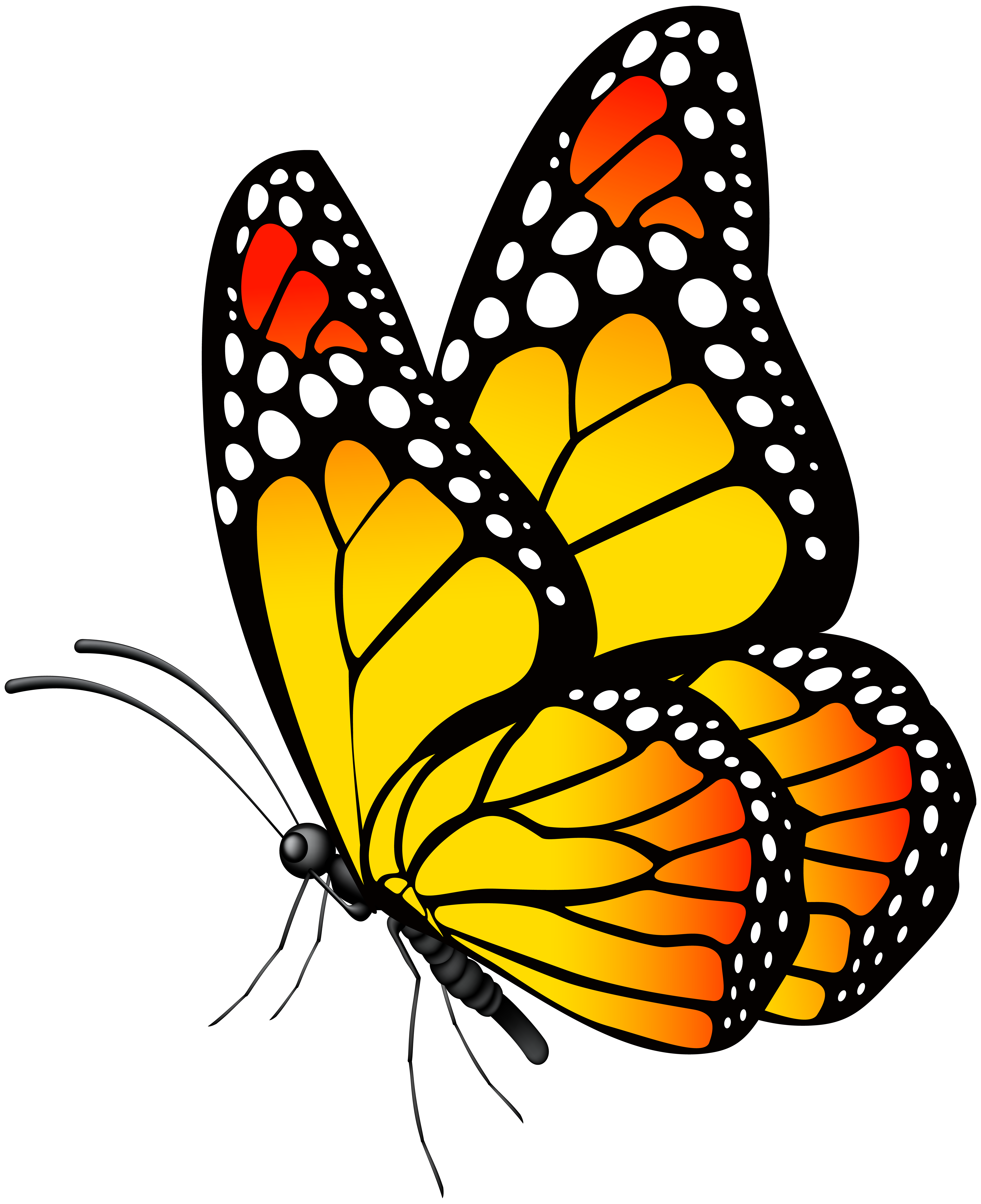 Free photo: Yellow butterfly - Moth, Plants, Wings - Free ...