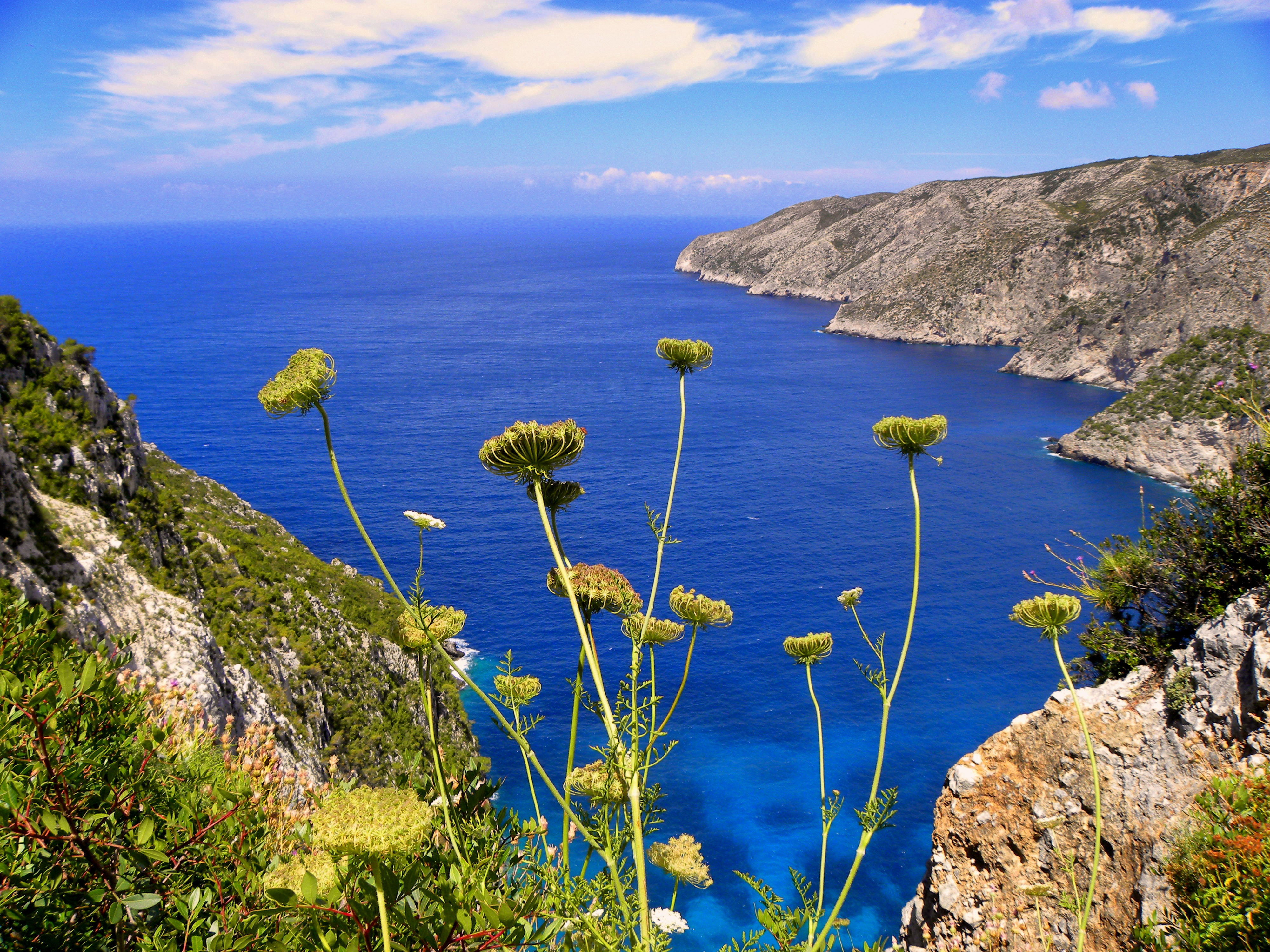 Yellow chrysanthemums overlooking sea view with mountains photo