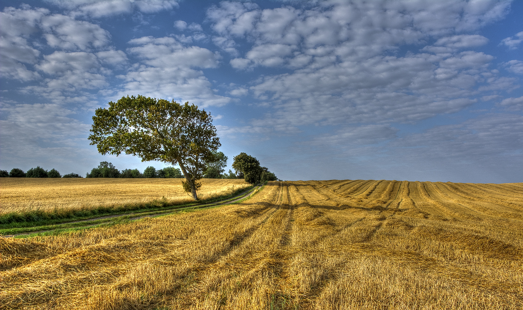 Untitled - Yellow Field Landscape Photography | High Resolution ...
