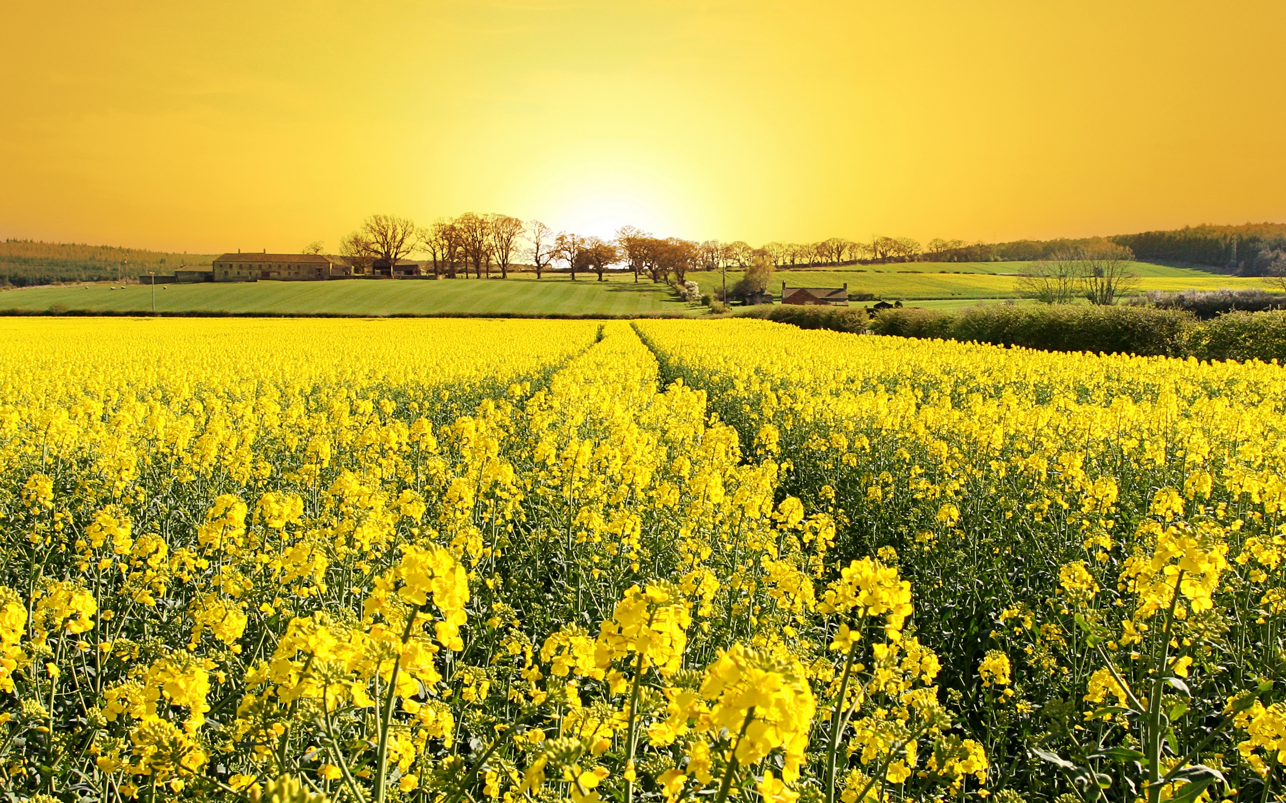 yellow-field-field-flowers-grass-house-landscape-nature-trees ...