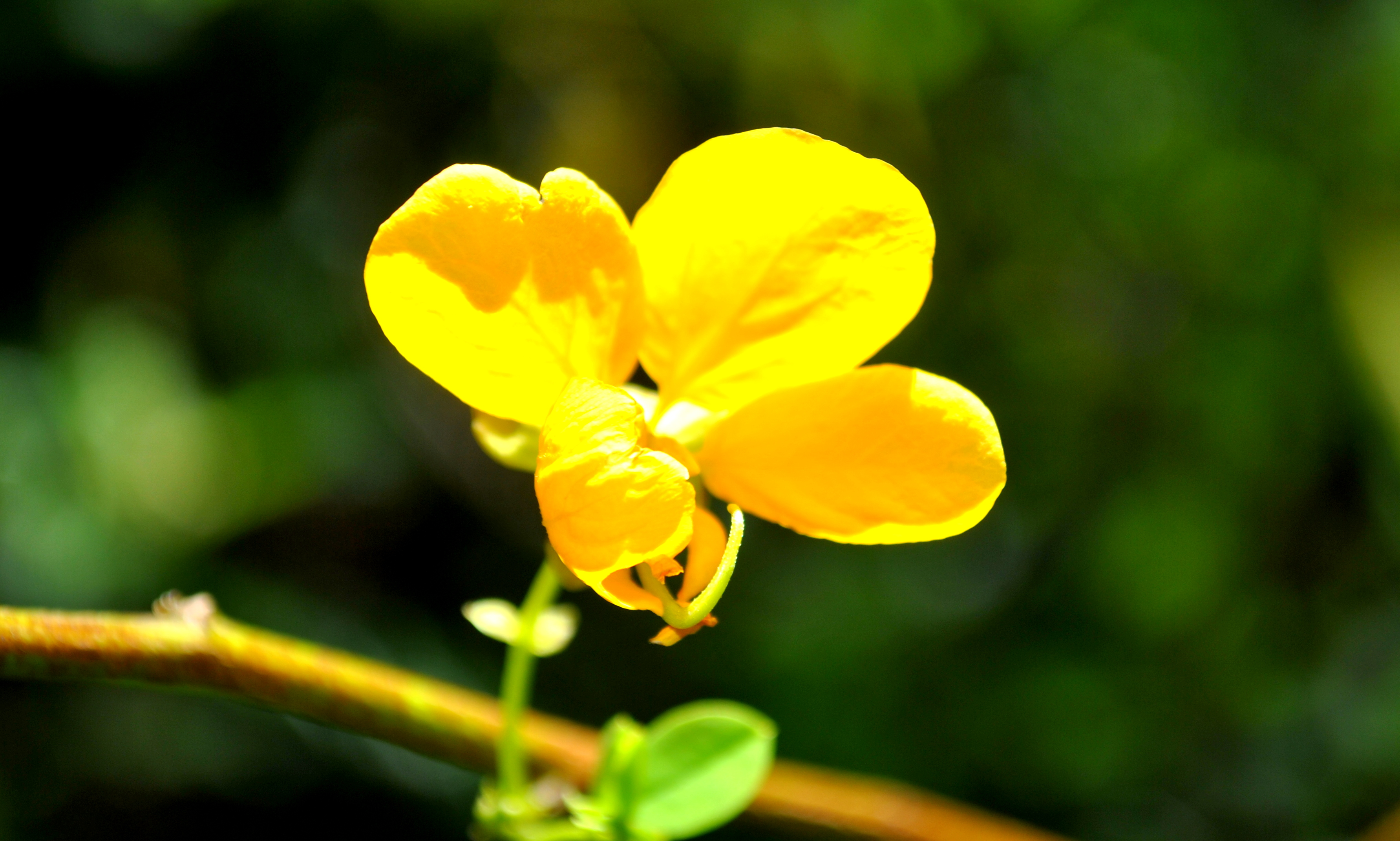 Free photo yellow flower yellow summer garden free download yellow flower yellow summer garden bloom hq photo mightylinksfo