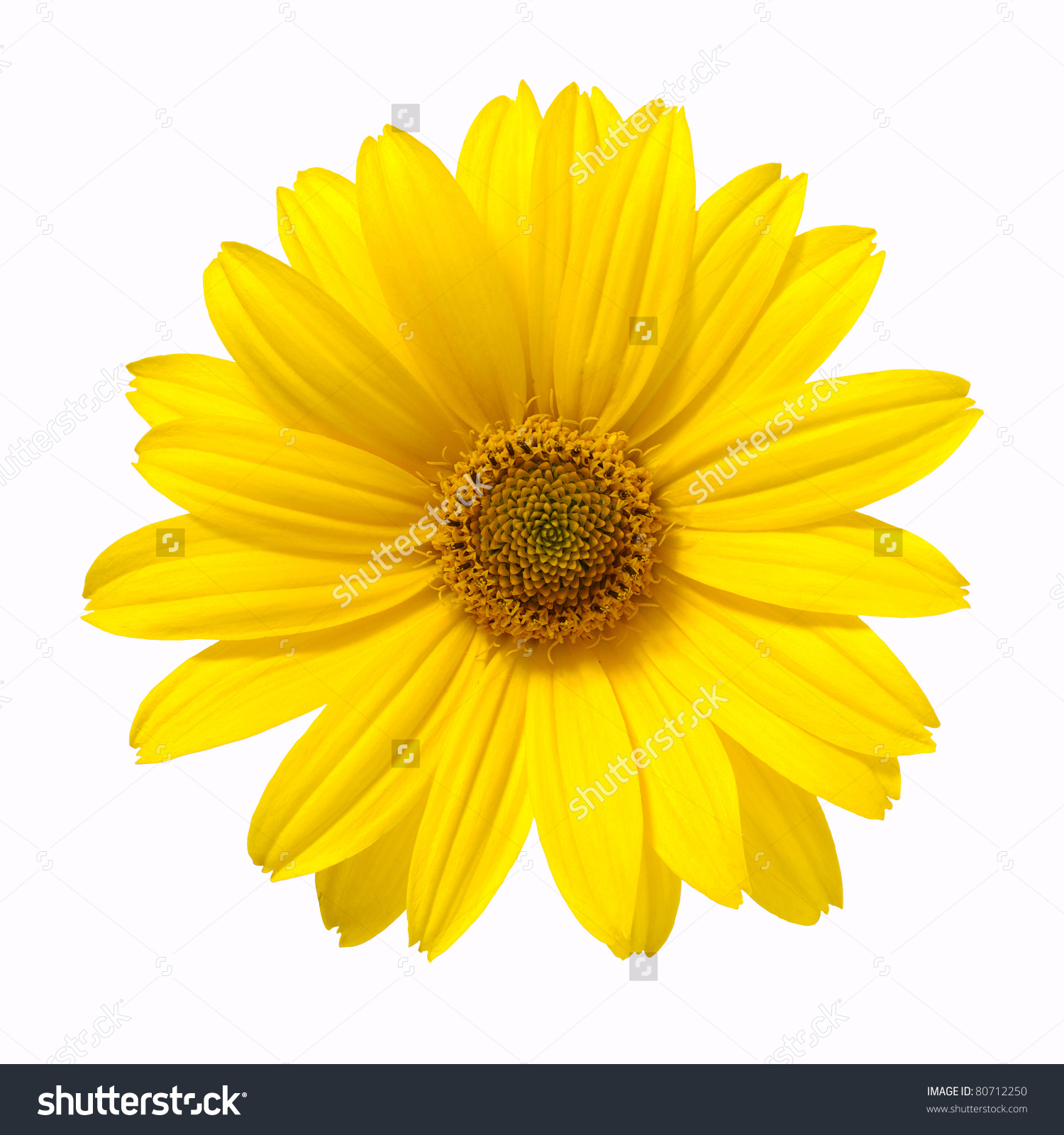 Free photo yellow flower yellow plant bloom non commercial yellow flower mightylinksfo