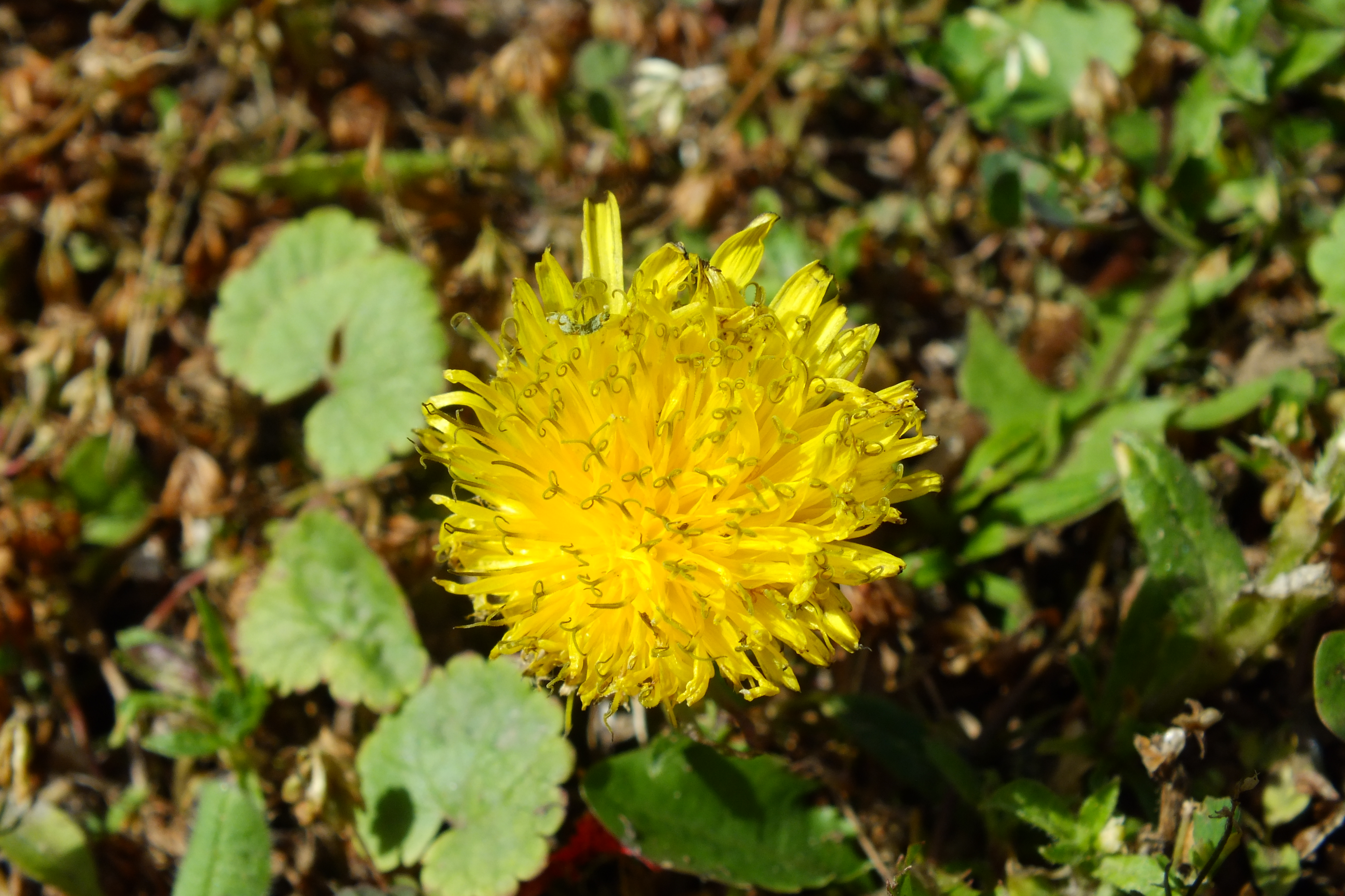 Yellow Flower, Bloom, Flower, Yellow, HQ Photo