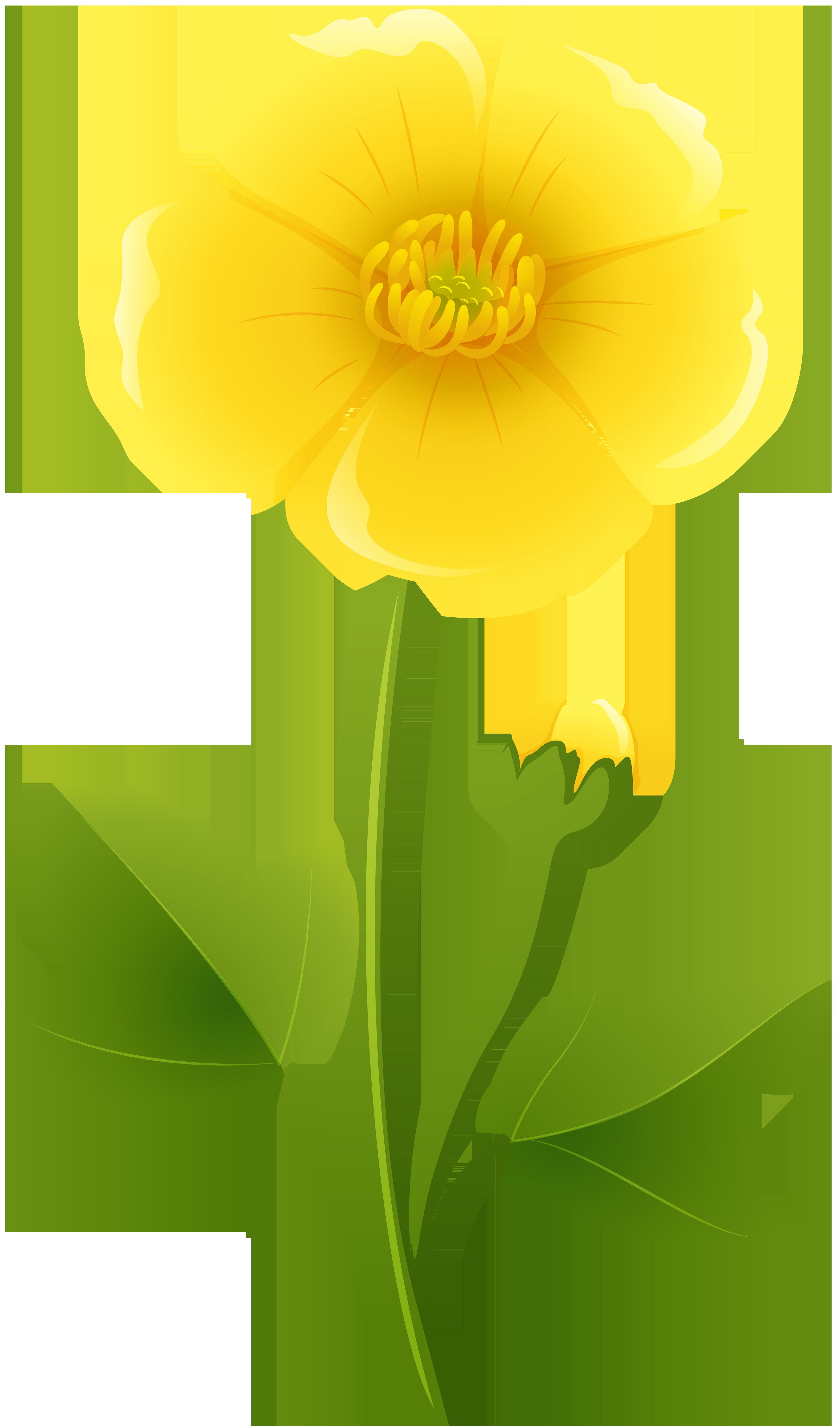 Free Photo Yellow Flower Leafs Leaves Leaf Free Download Jooinn