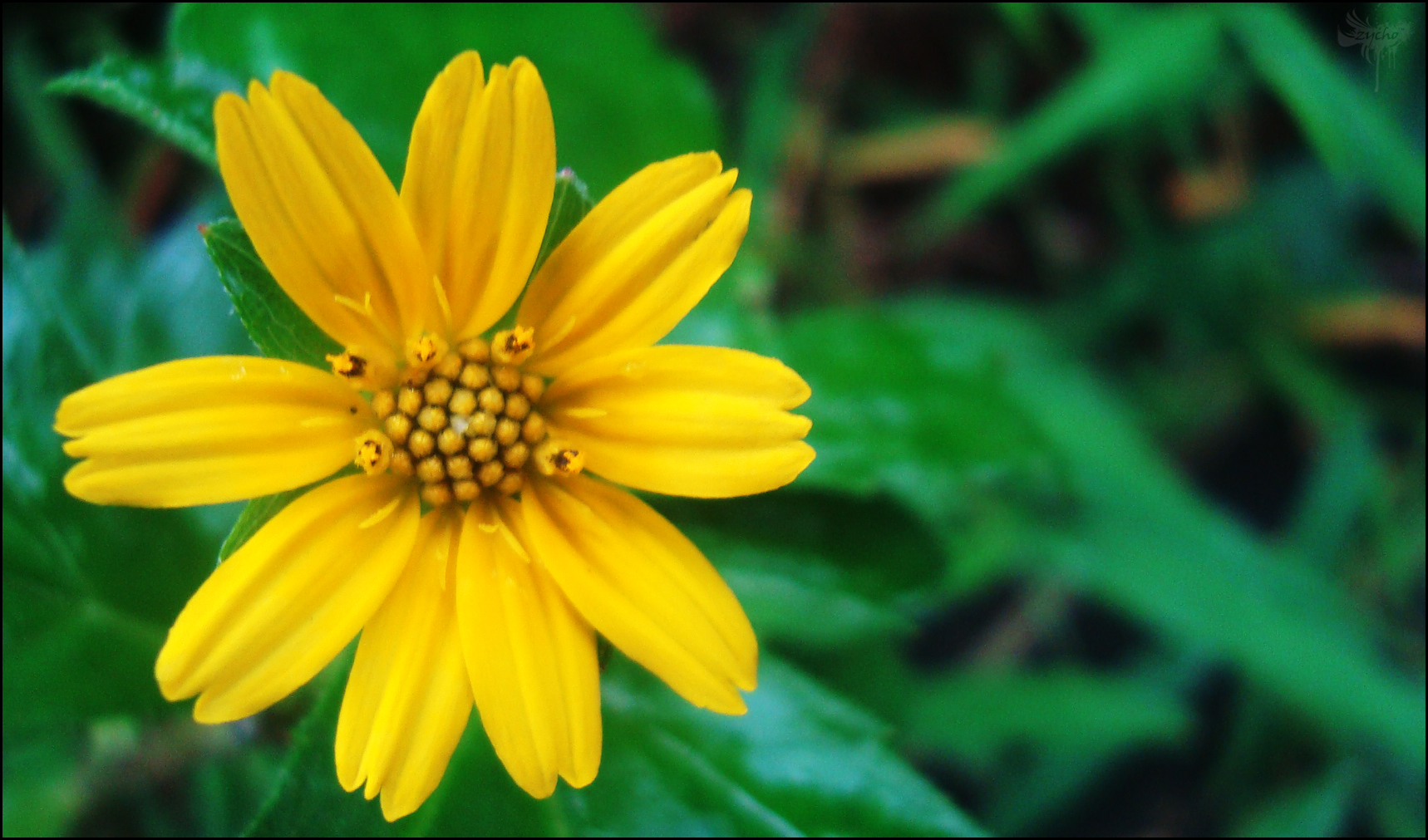 Free Photo Yellow Flower Plants Yellow Nature Free Download