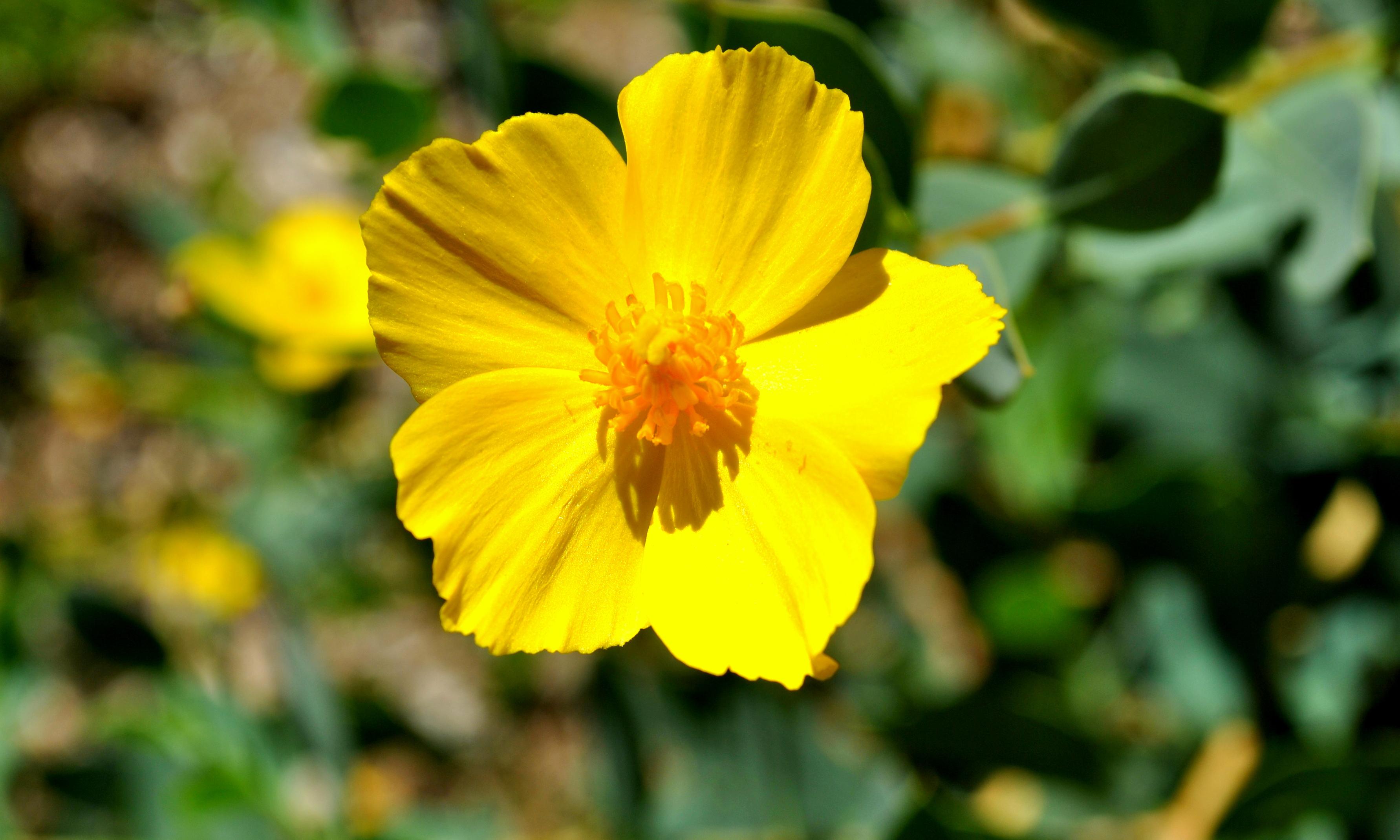 Free photo yellow flower spring summer yellow free download yellow flower mightylinksfo