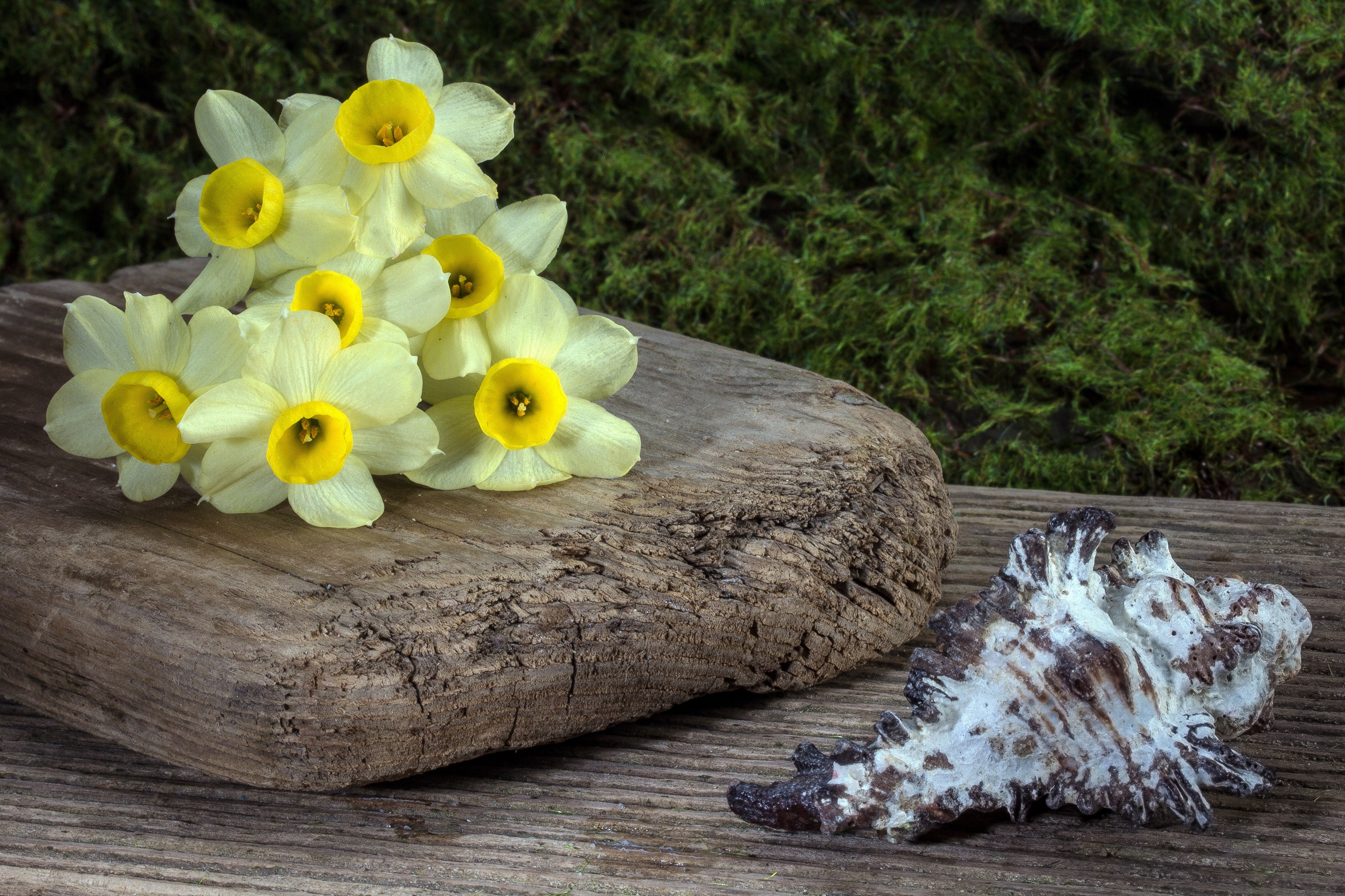 Yellow flower on wooden plank beside white shell photo