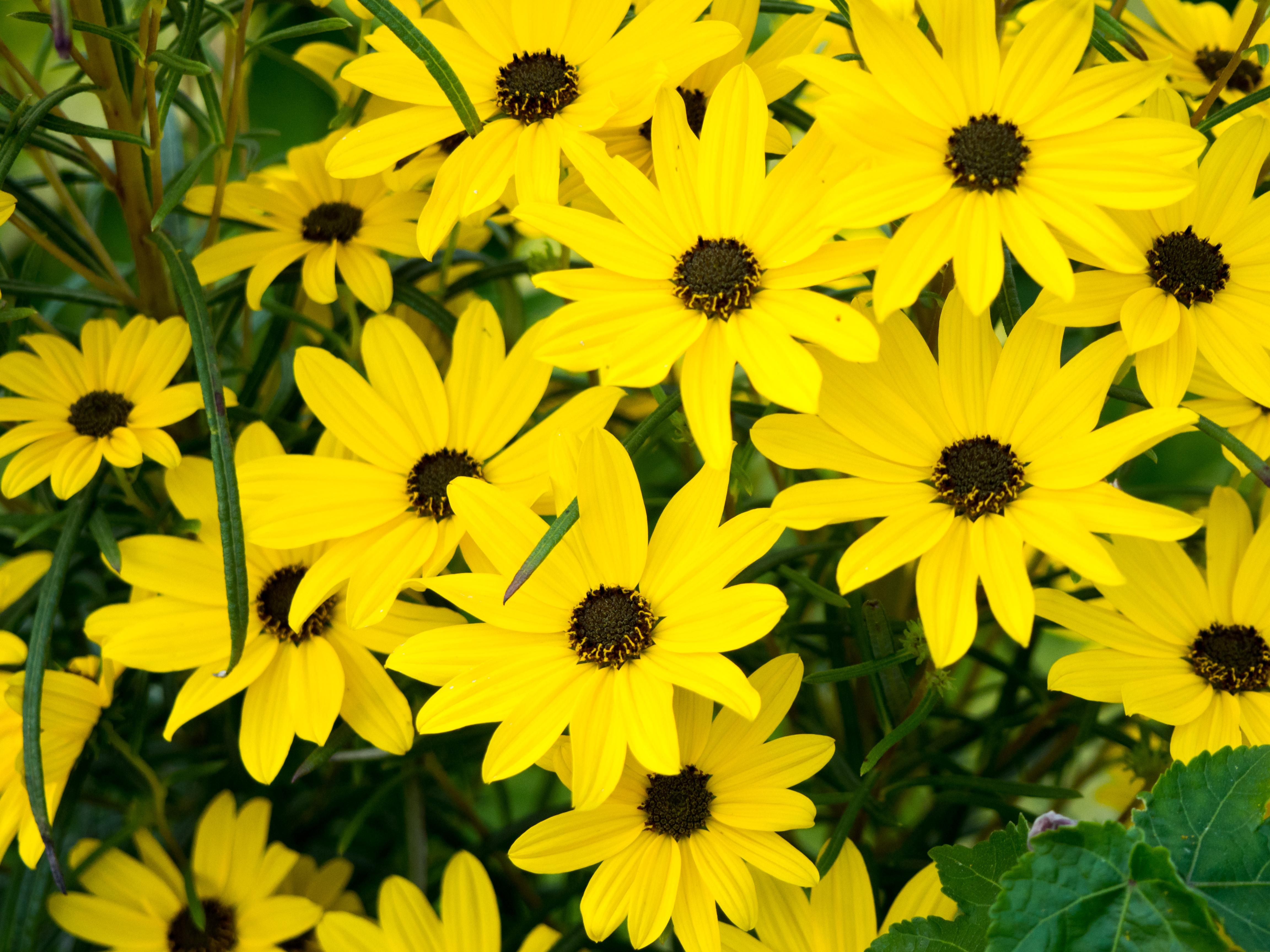 Yellow Flowers in Garden – MMT
