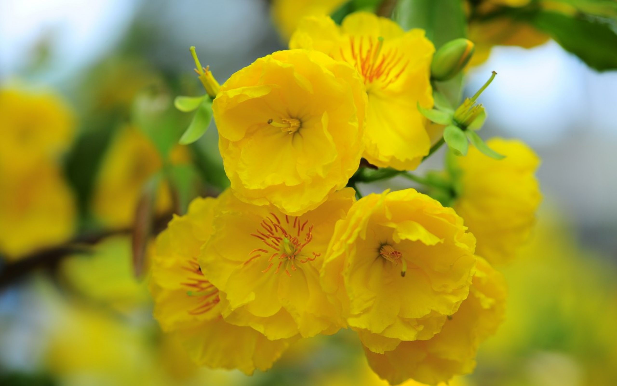 Free Photo Yellow Flowers Spring Summer Yellow Free Download