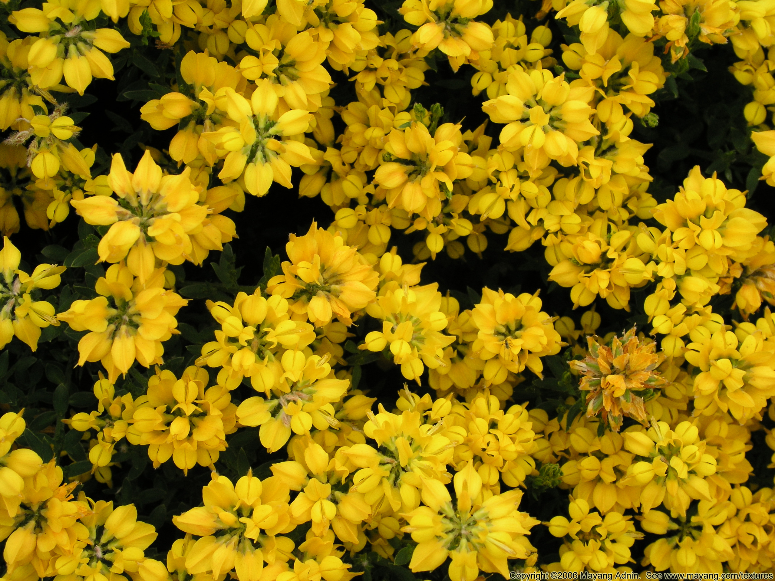 Free photo yellow flowers petals plant yellow non commercial plants with yellow flowers 17 cool wallpaper hdflowerwallpaper mightylinksfo