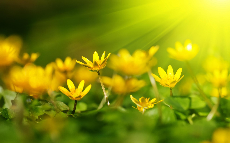 Free photo yellow flowers summer yellow green free download yellow flowers mightylinksfo