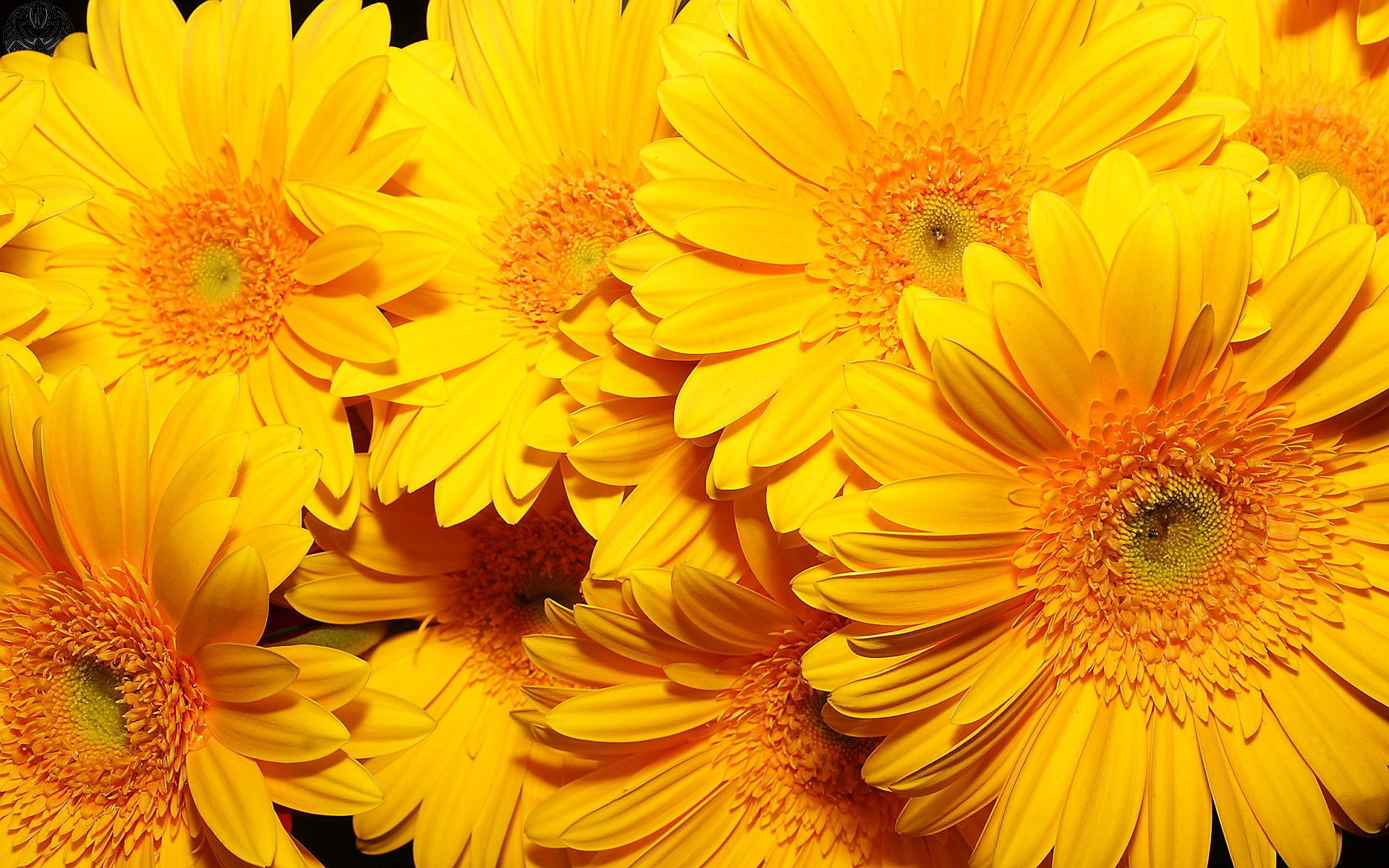 Free Photo Yellow Flowers Nature Leaves Petals Free Download