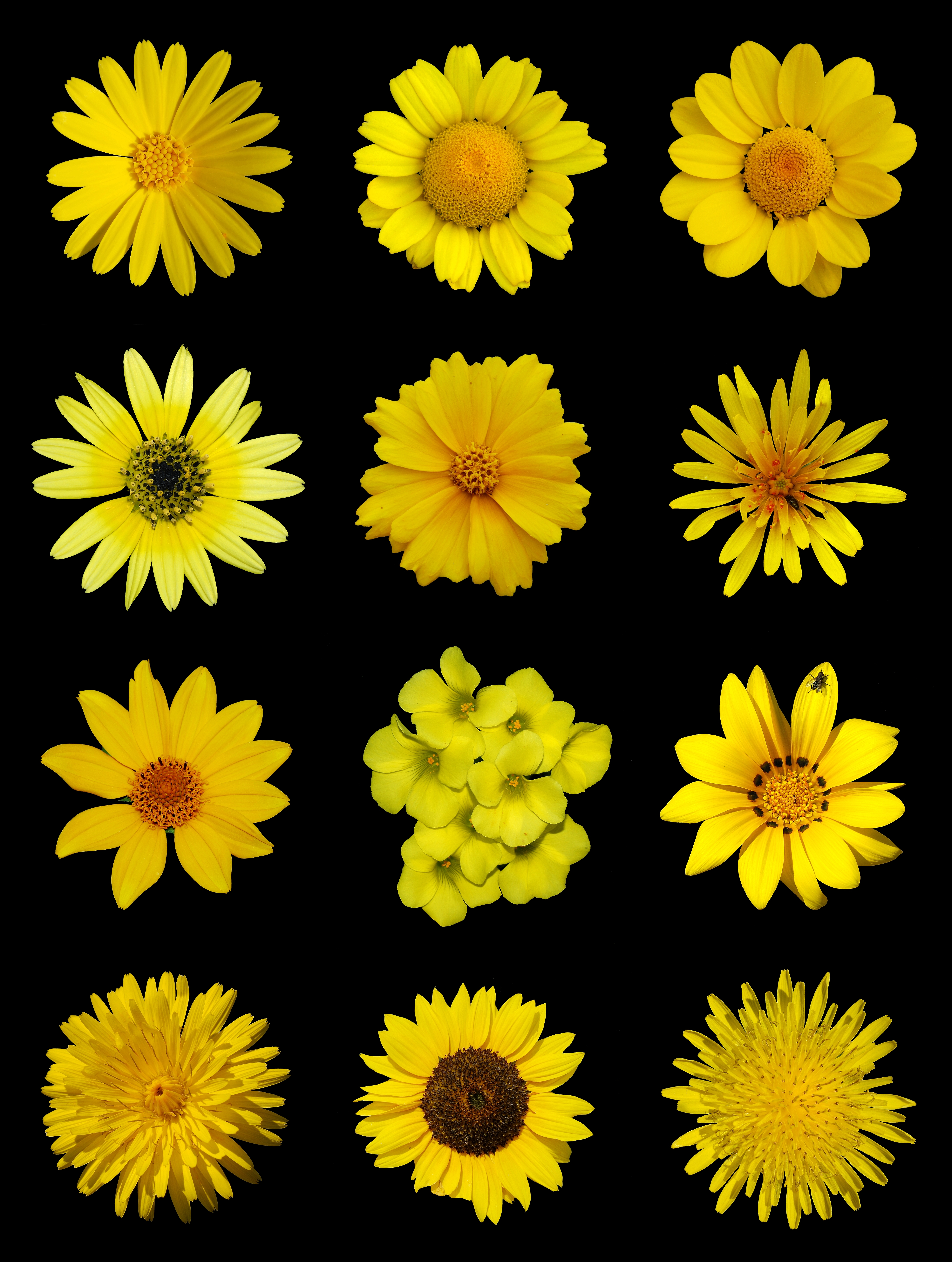 Free photo yellow flowers overy yellow insects creative yellow flowers mightylinksfo