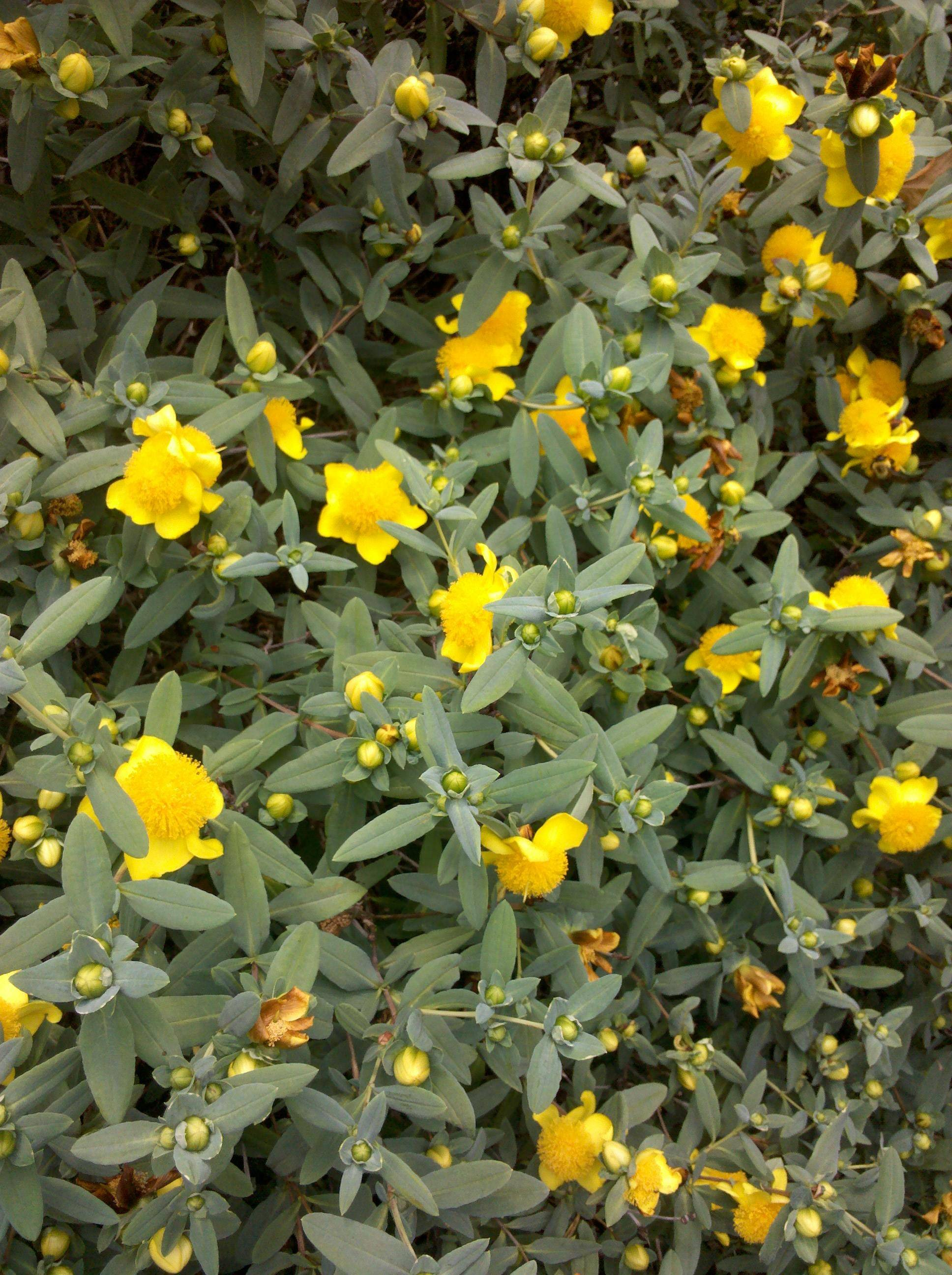 Free Photo Yellow Flowers Yellow Summer Plant Free Download